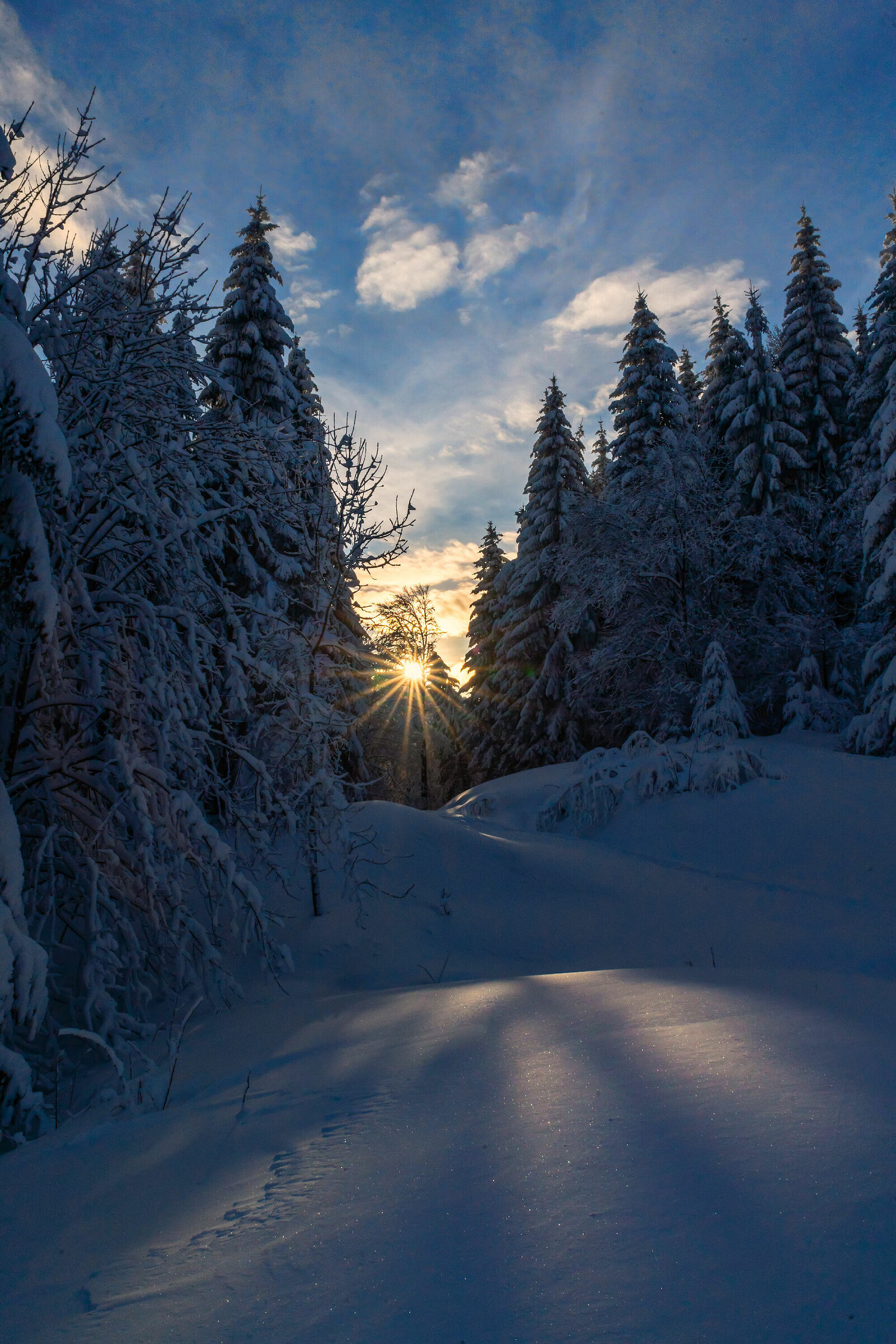 Luce fra neve ed abeti...