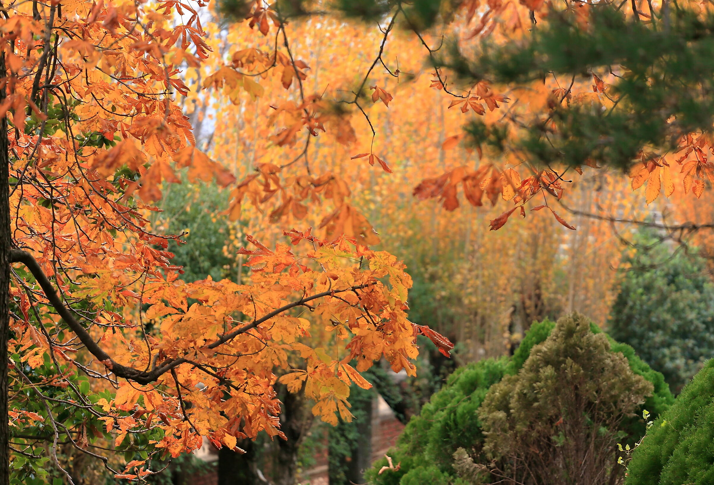 Foliage in Villa Revoltella...