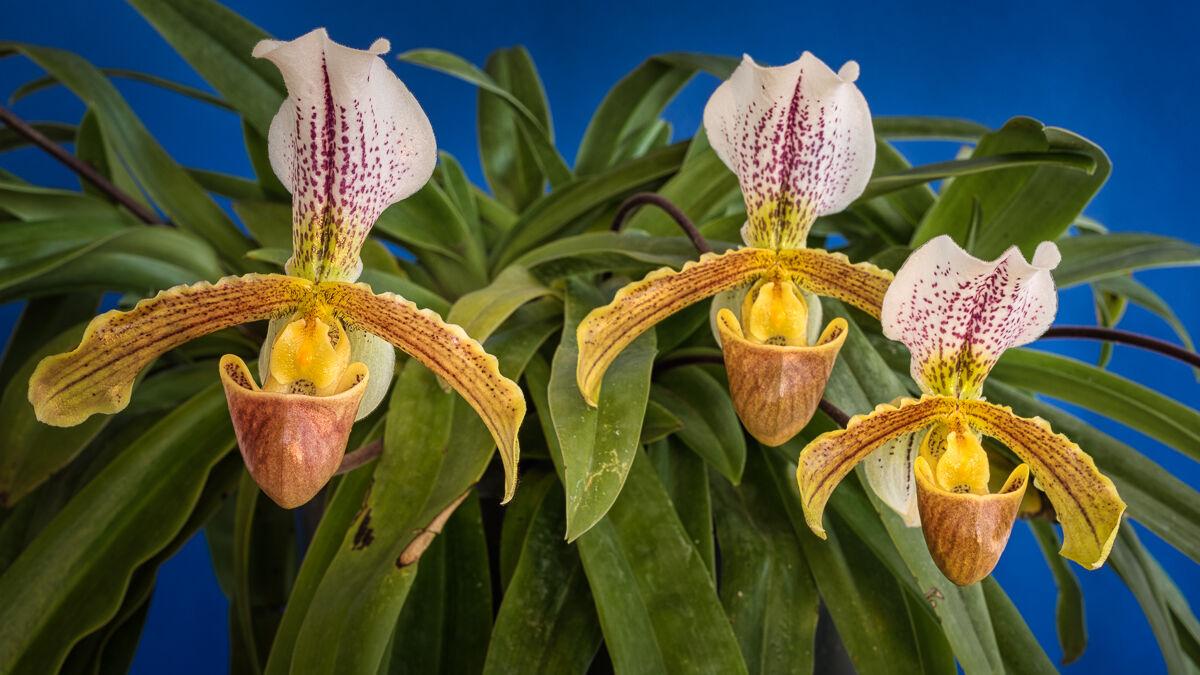 Orchids 1...