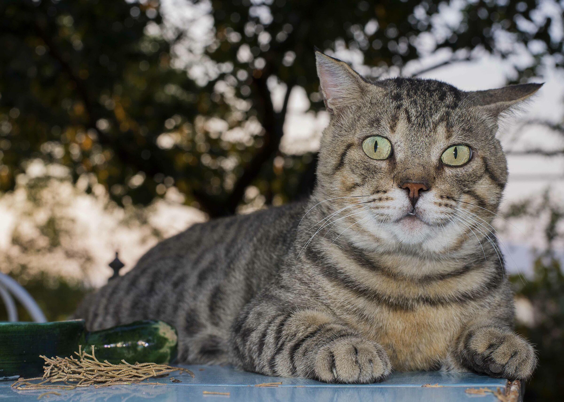 Pine the Cat...
