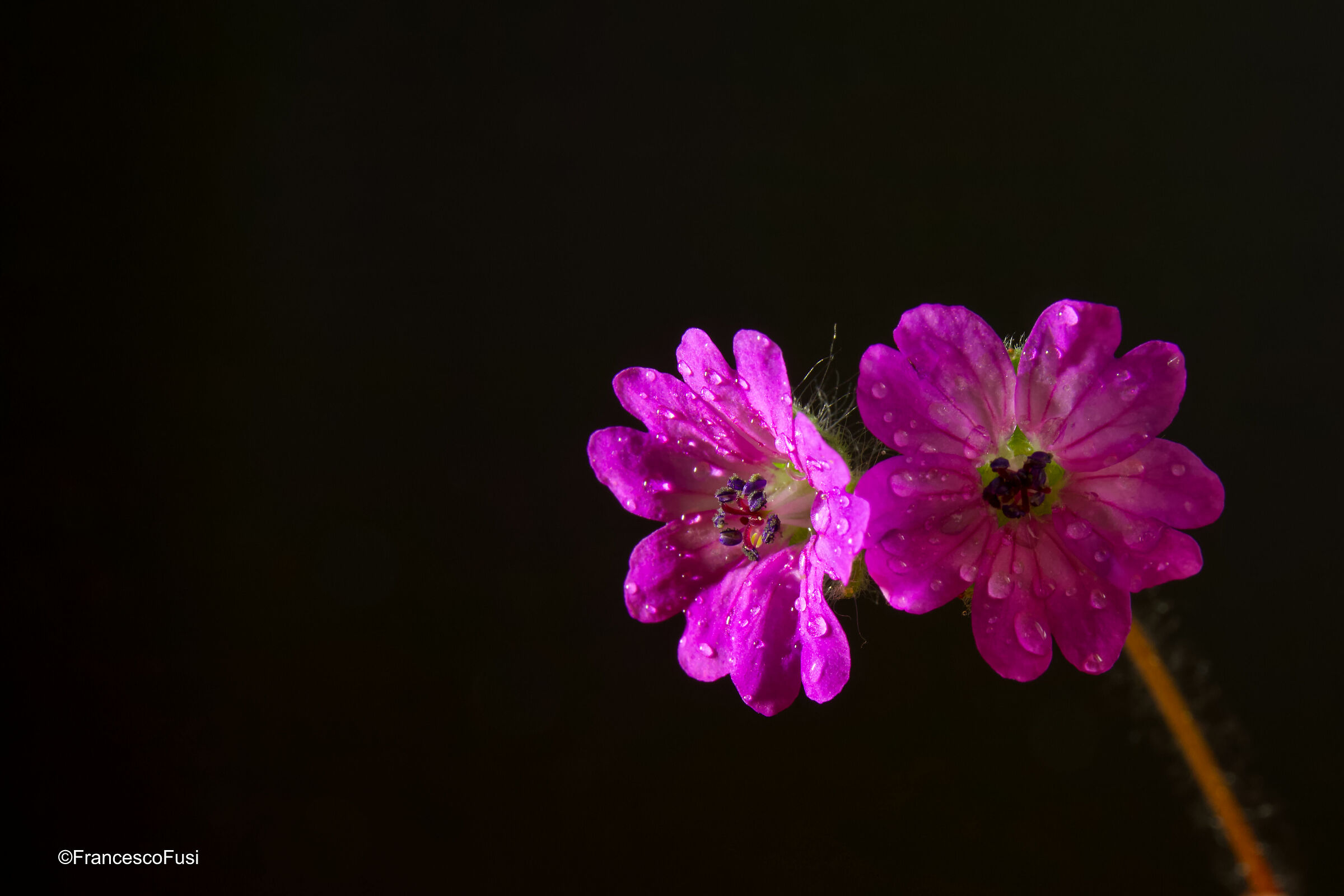 A pair of flowers......