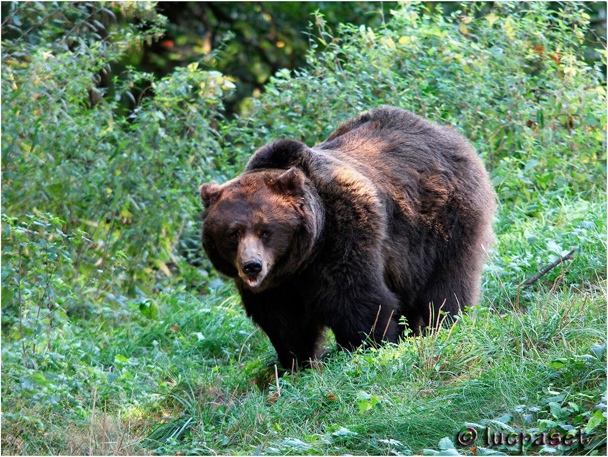 Our Bear...