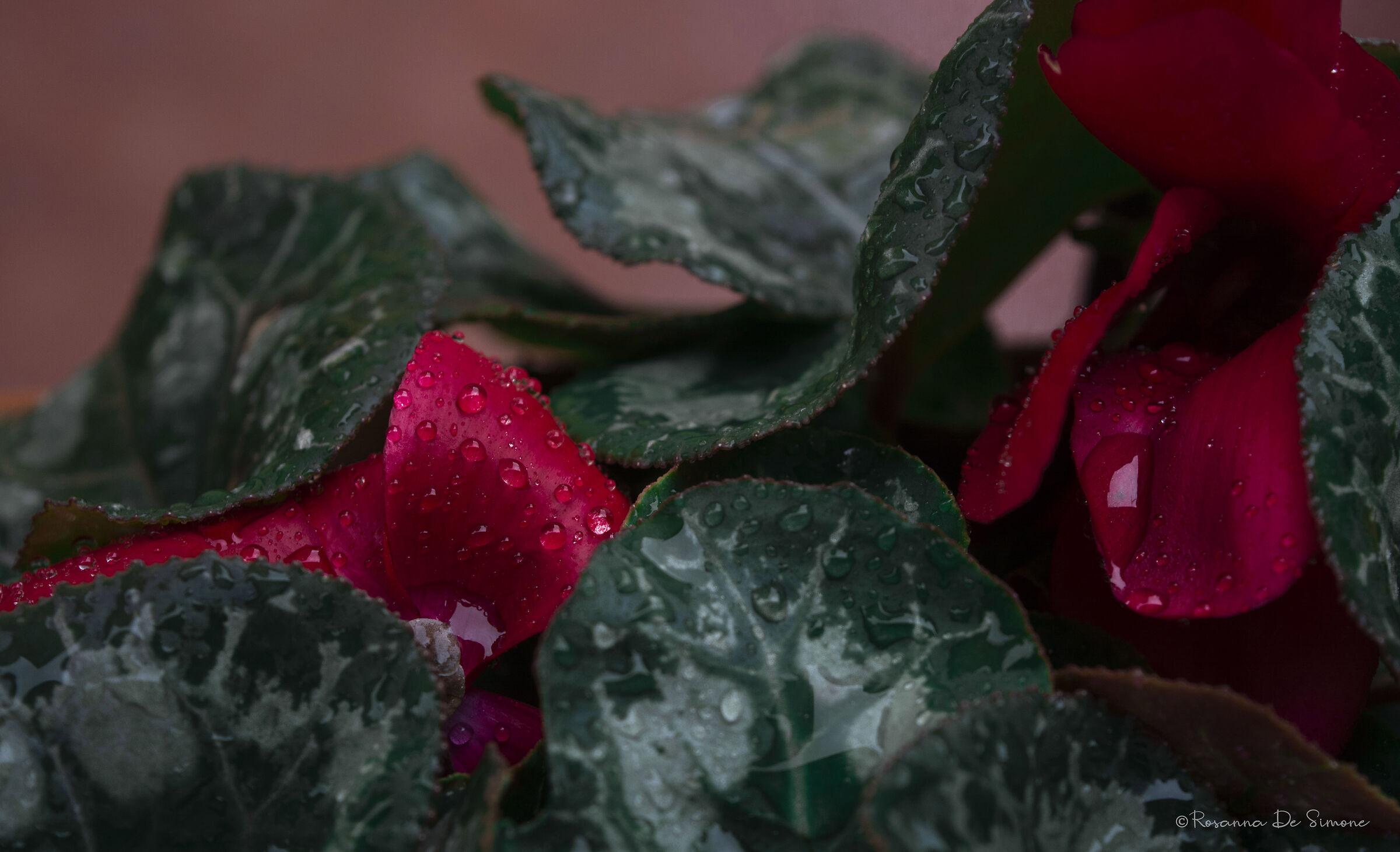 Pioggia e rosso...
