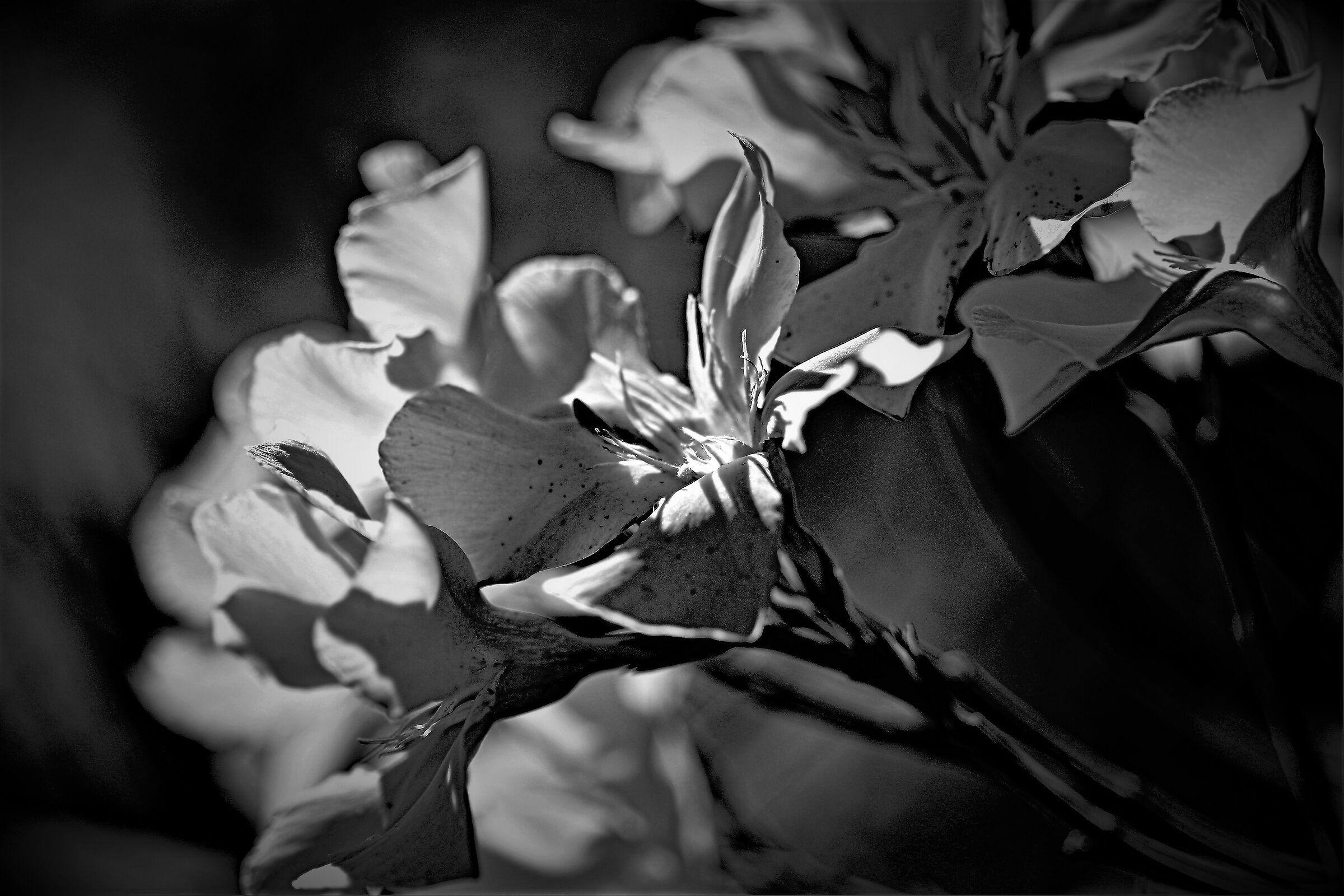 Flowers a quarantine......
