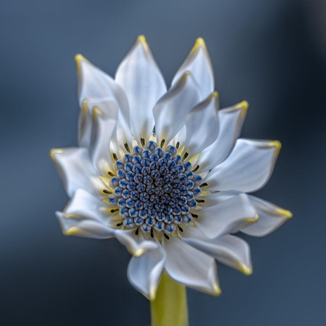I dreamed of a flower...