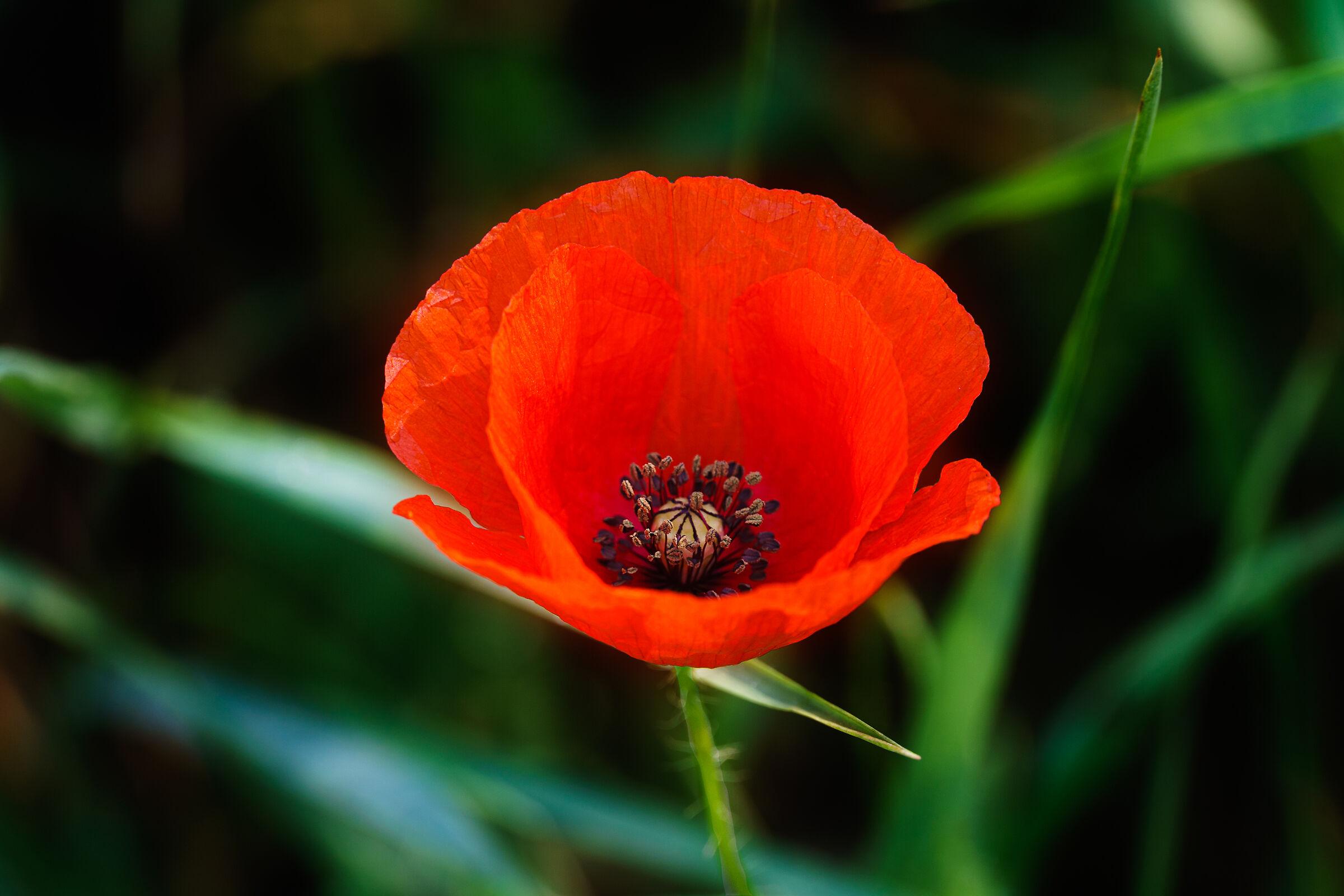 The Flower of Demeter...