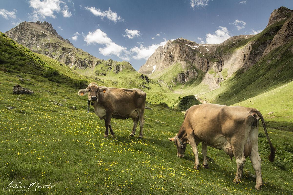 Alpe Nefelgiu - Alta Val Formazza...
