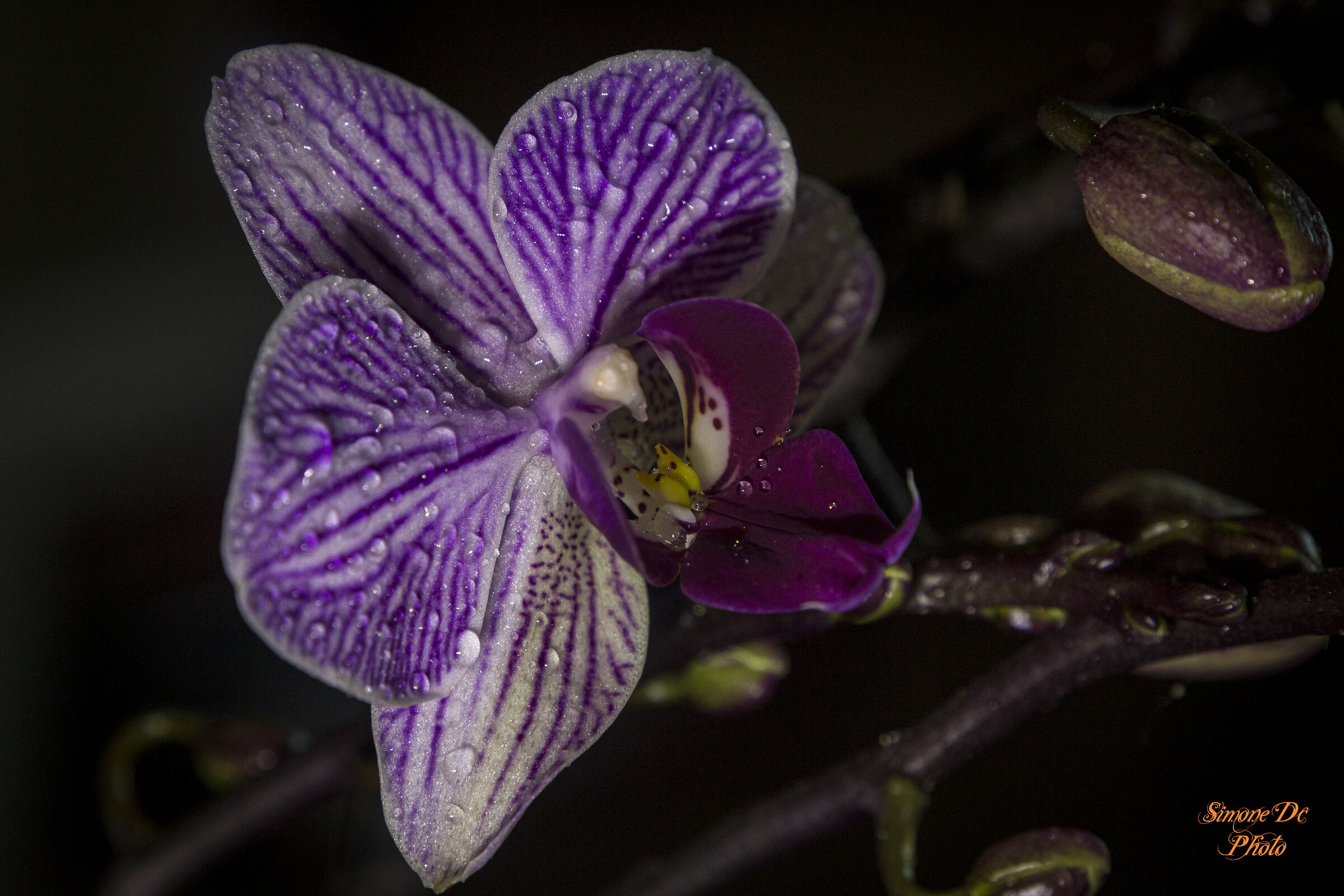 orchidea viola...