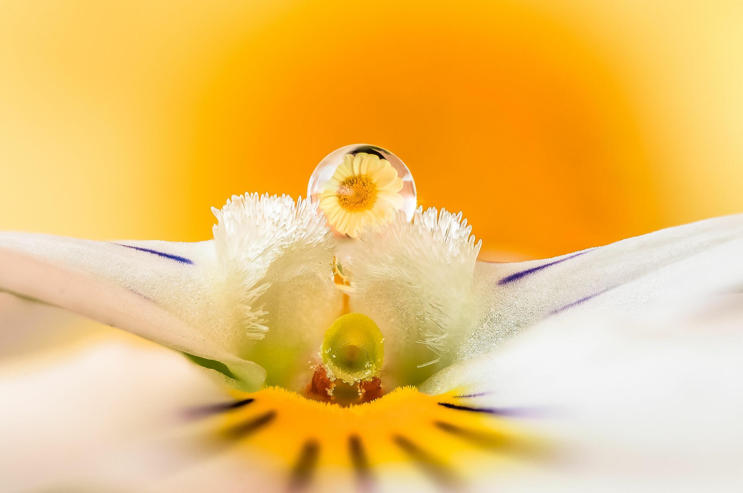 Drops & Flowers Gocce Fiori Riflessi Mario jr Nicorelli...