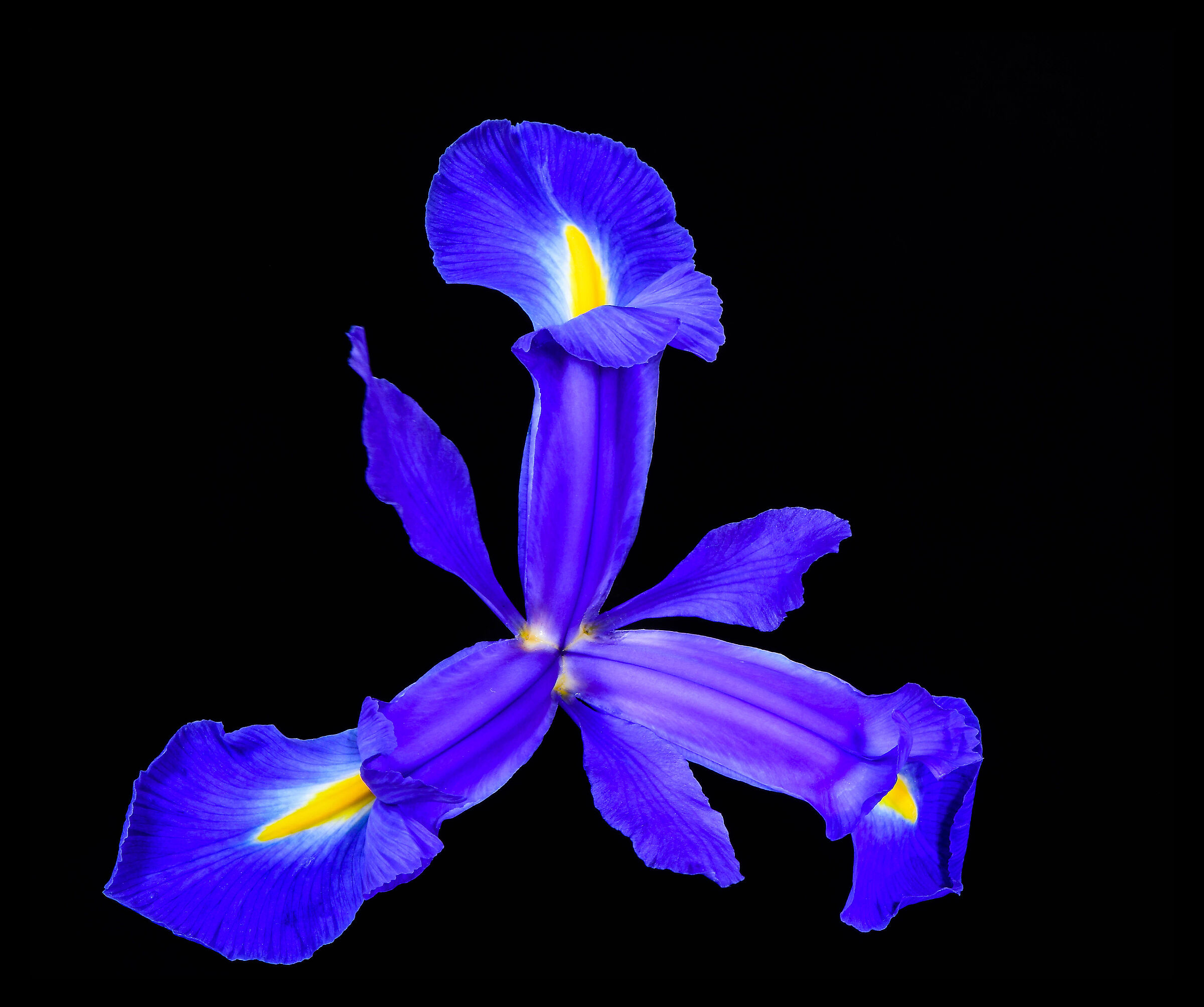 Iris Spaziale....