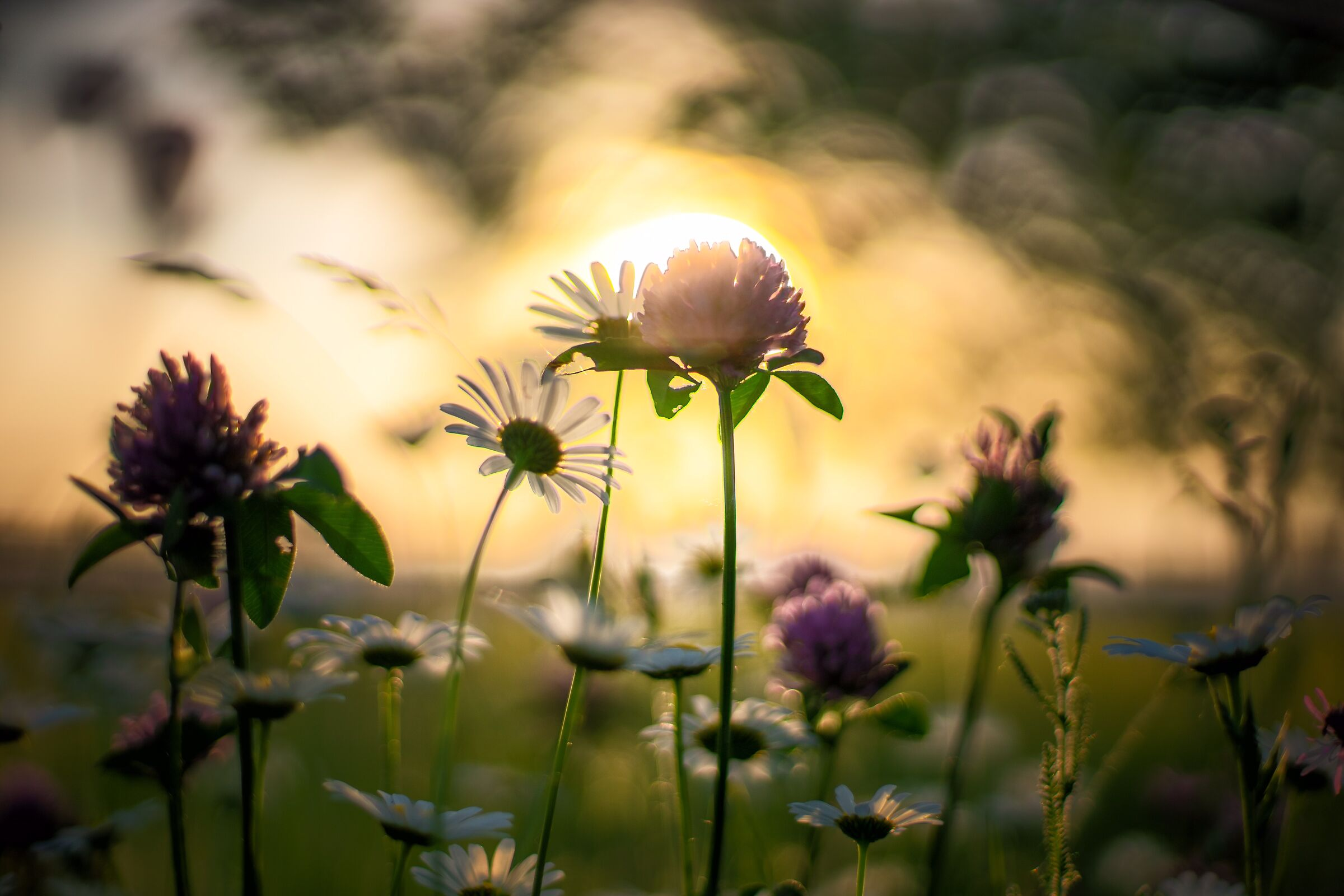 In the meadow, at sunset......