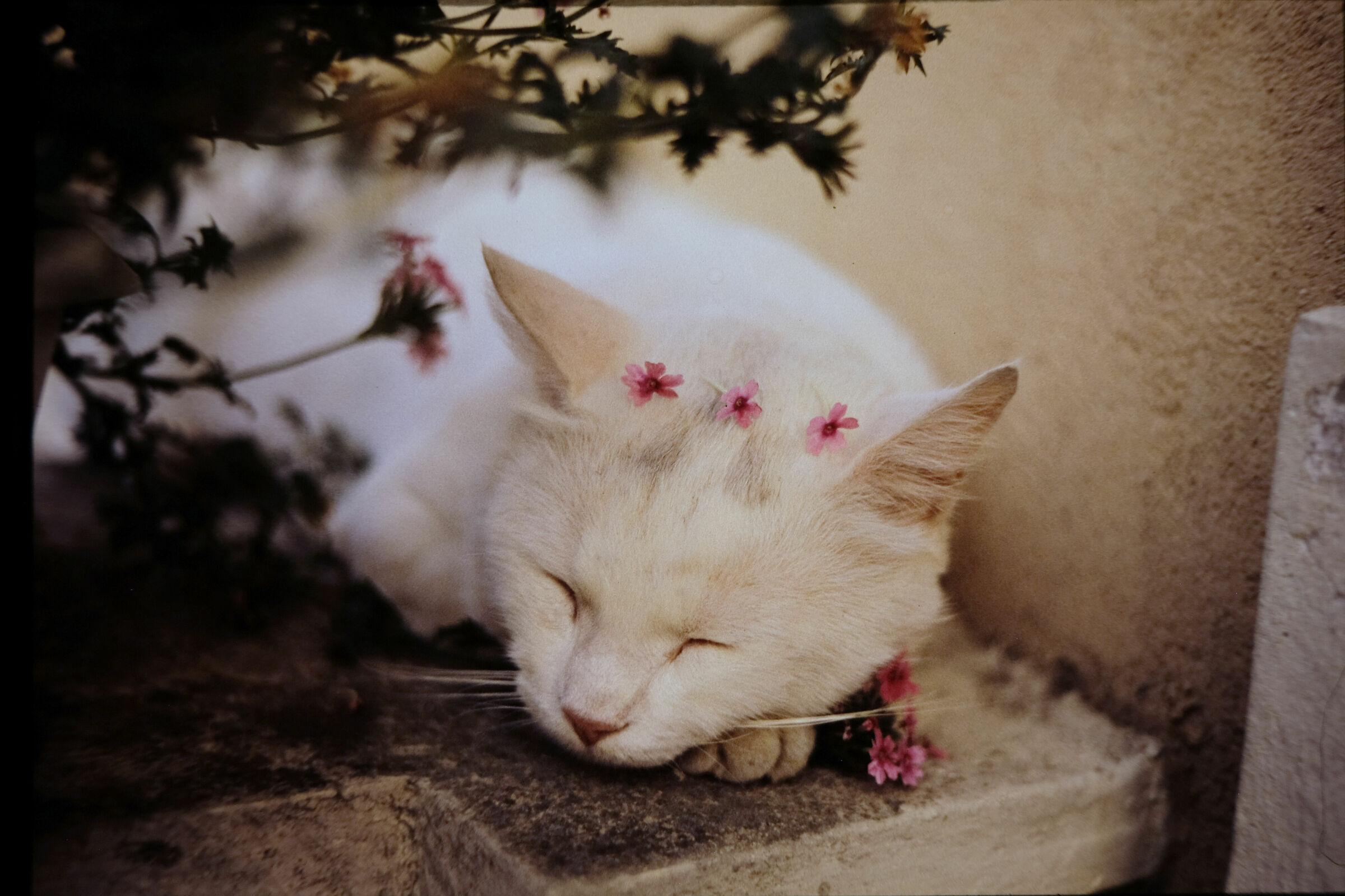 Ciunga, our first kitten...