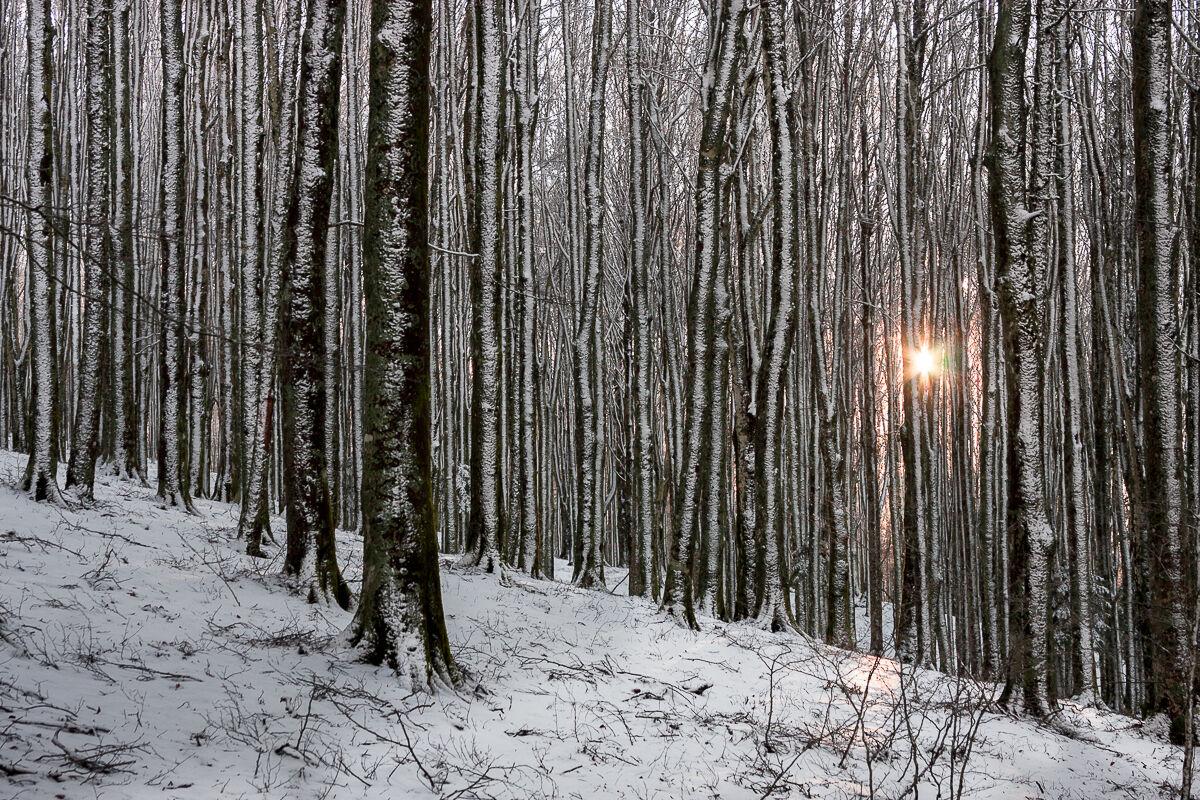 Snow and sun ......