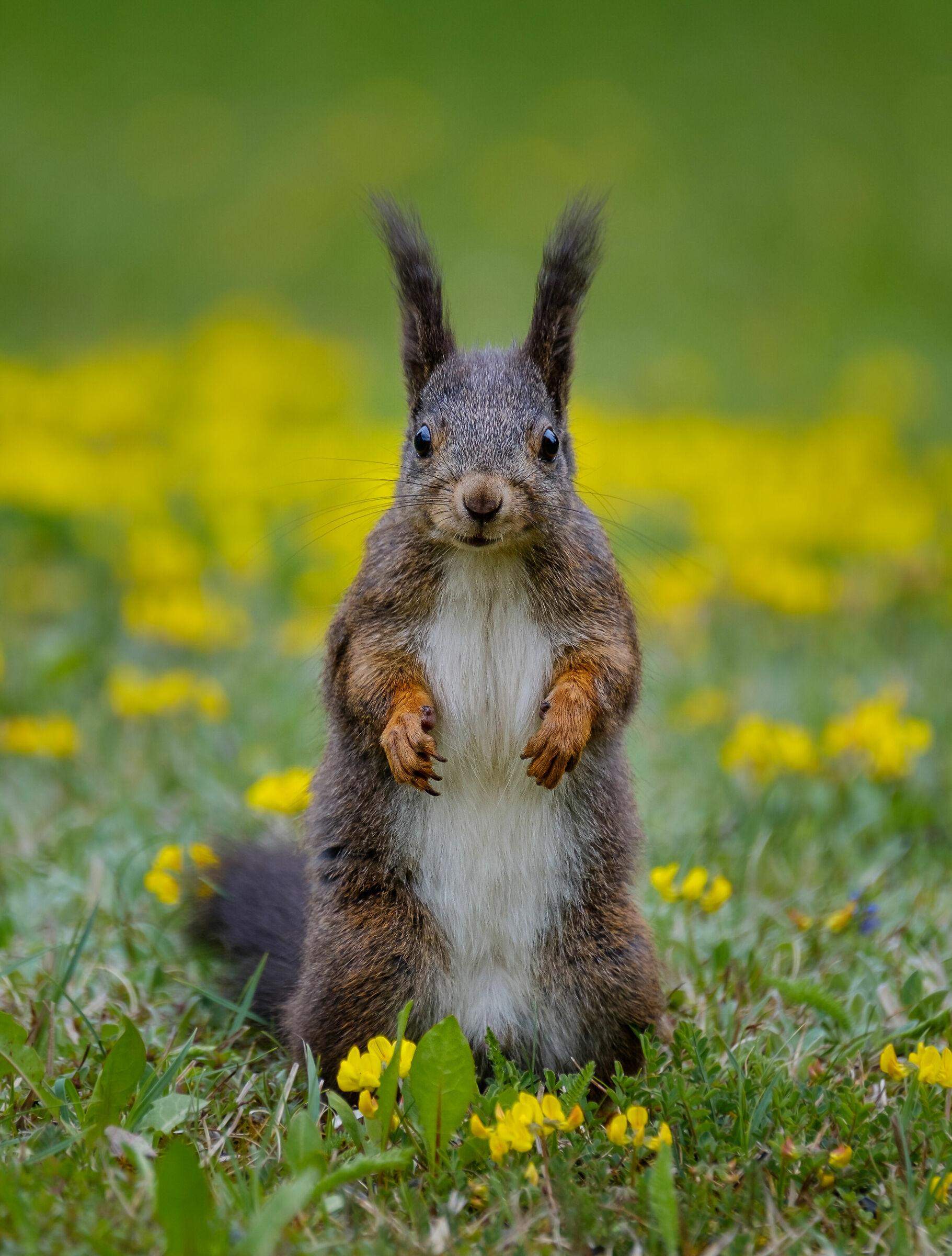 Give me the peanut!...