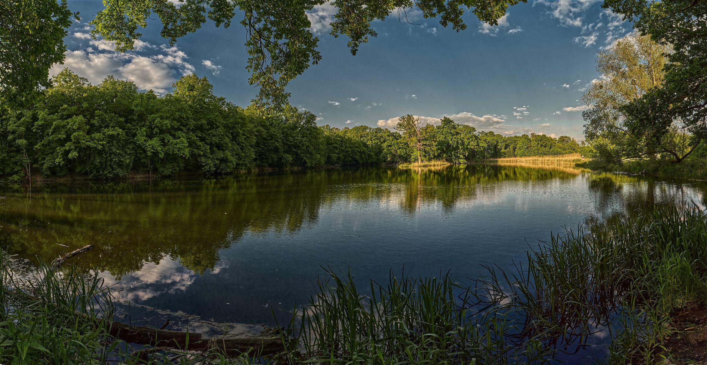 The Pond - Panorama...