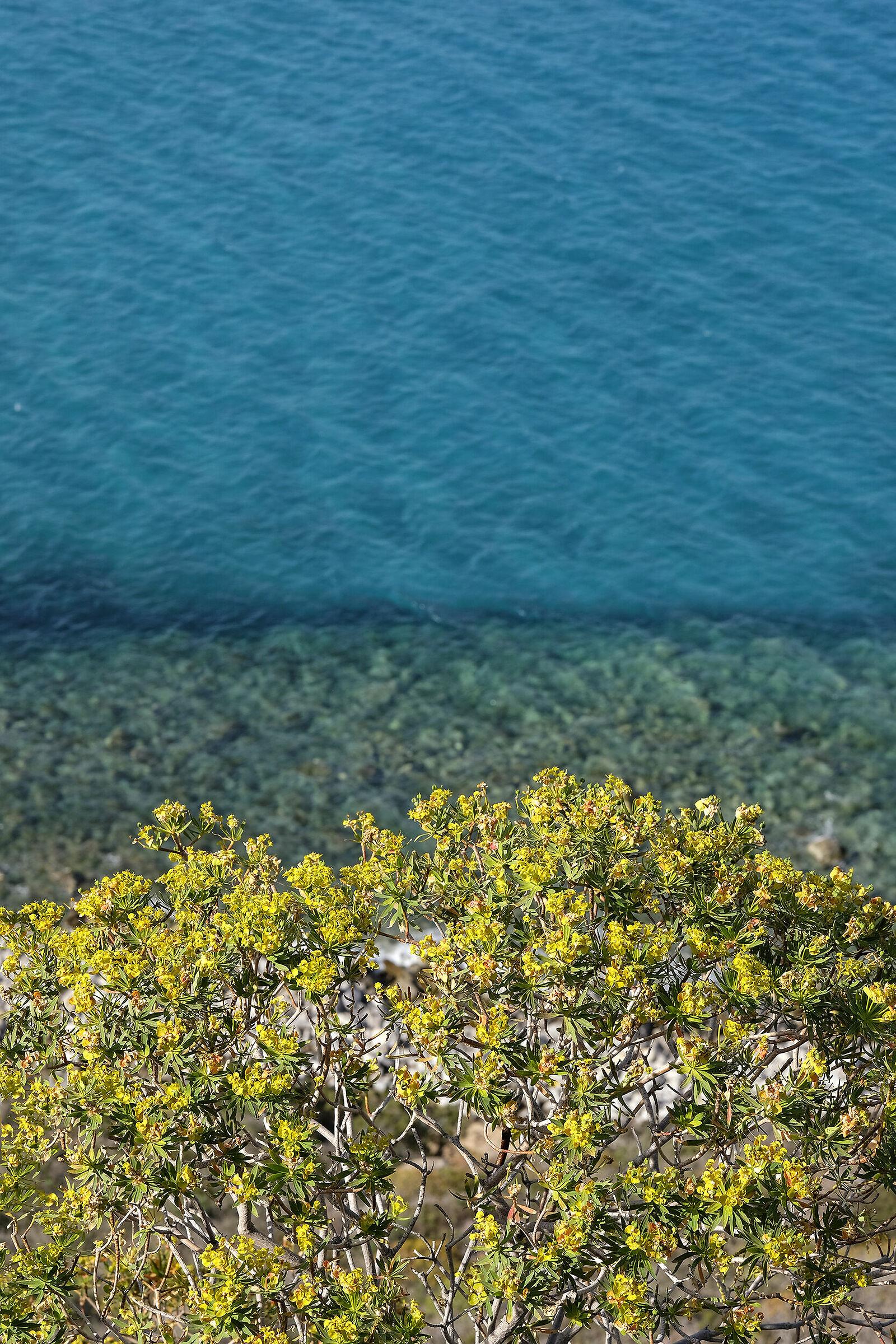 Sardinian Colors...