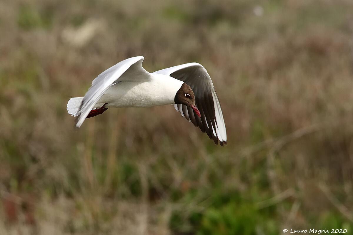 Feathery kite...