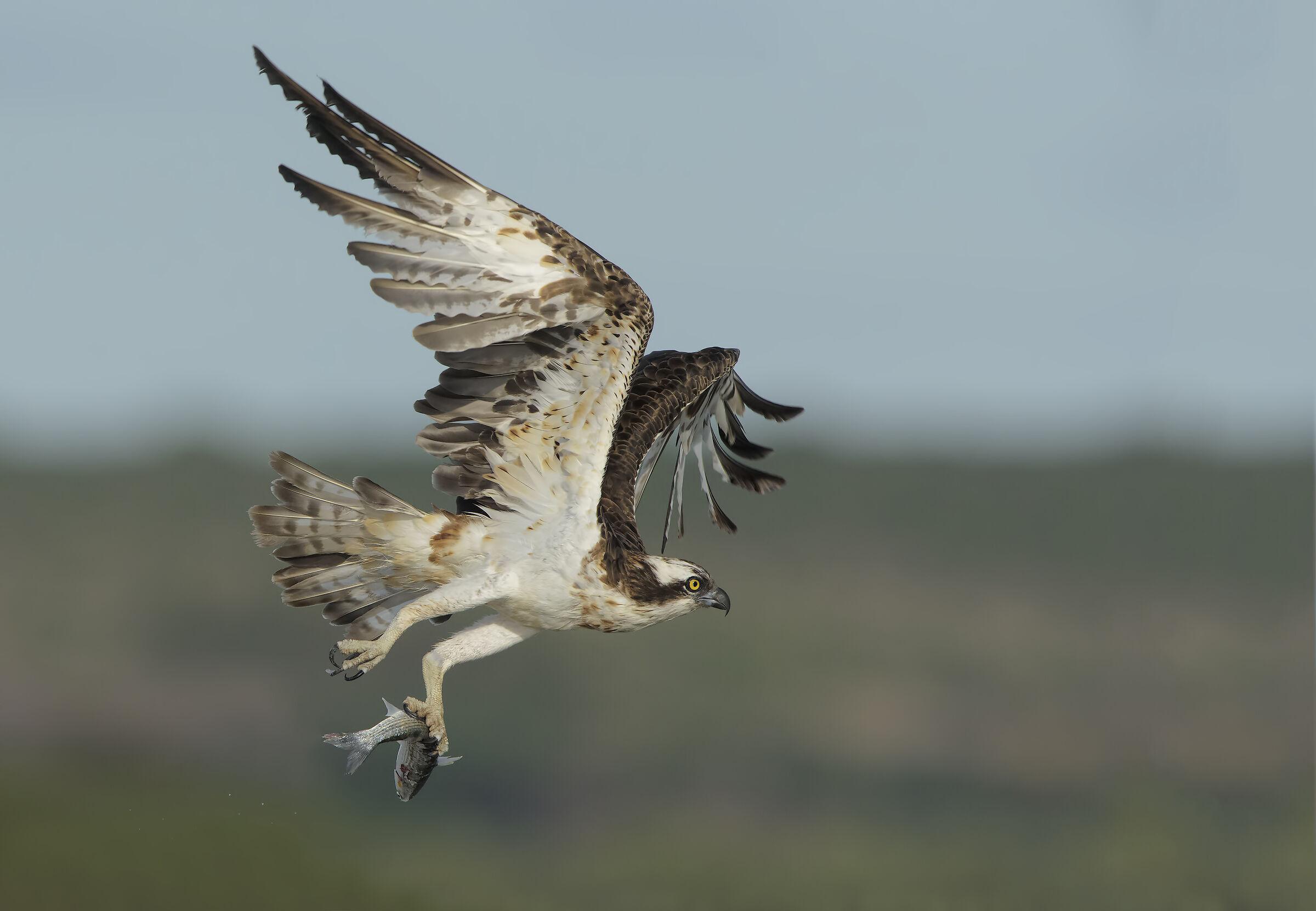 Fisherman's Flight...