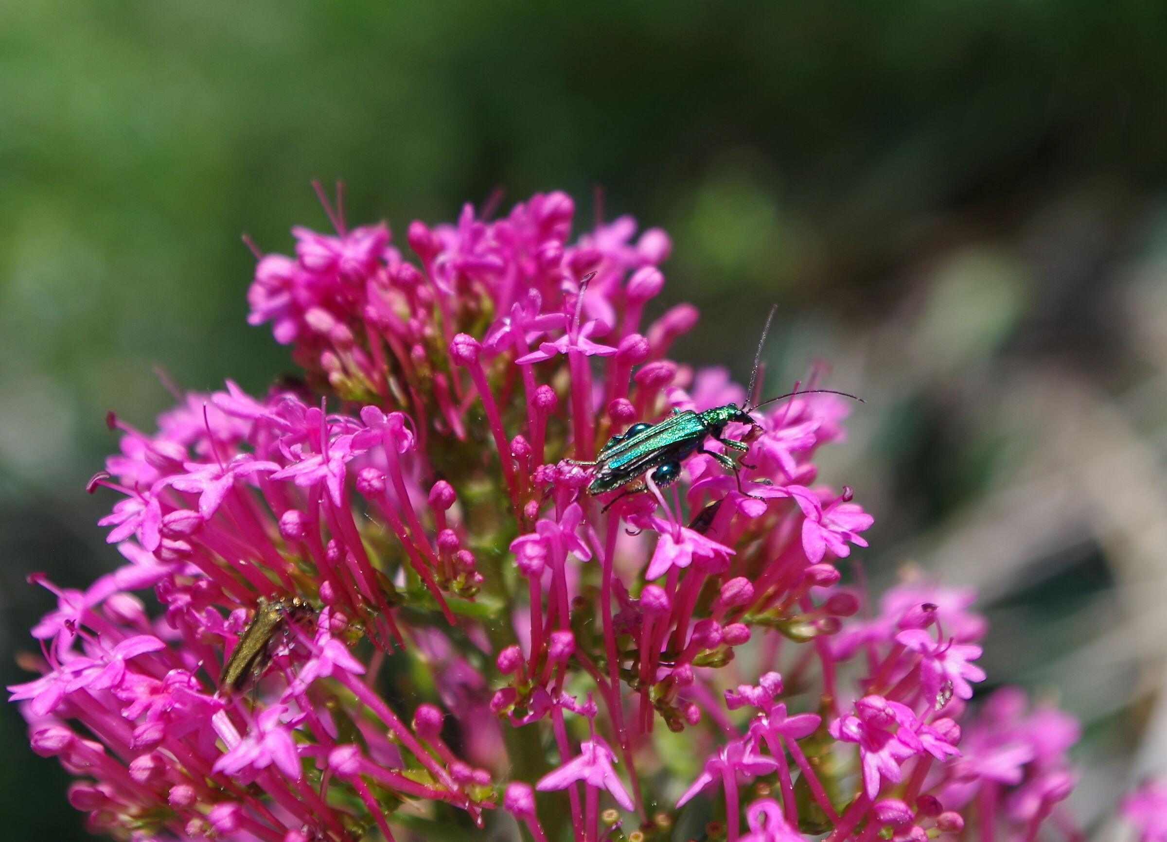 flowers and insects...
