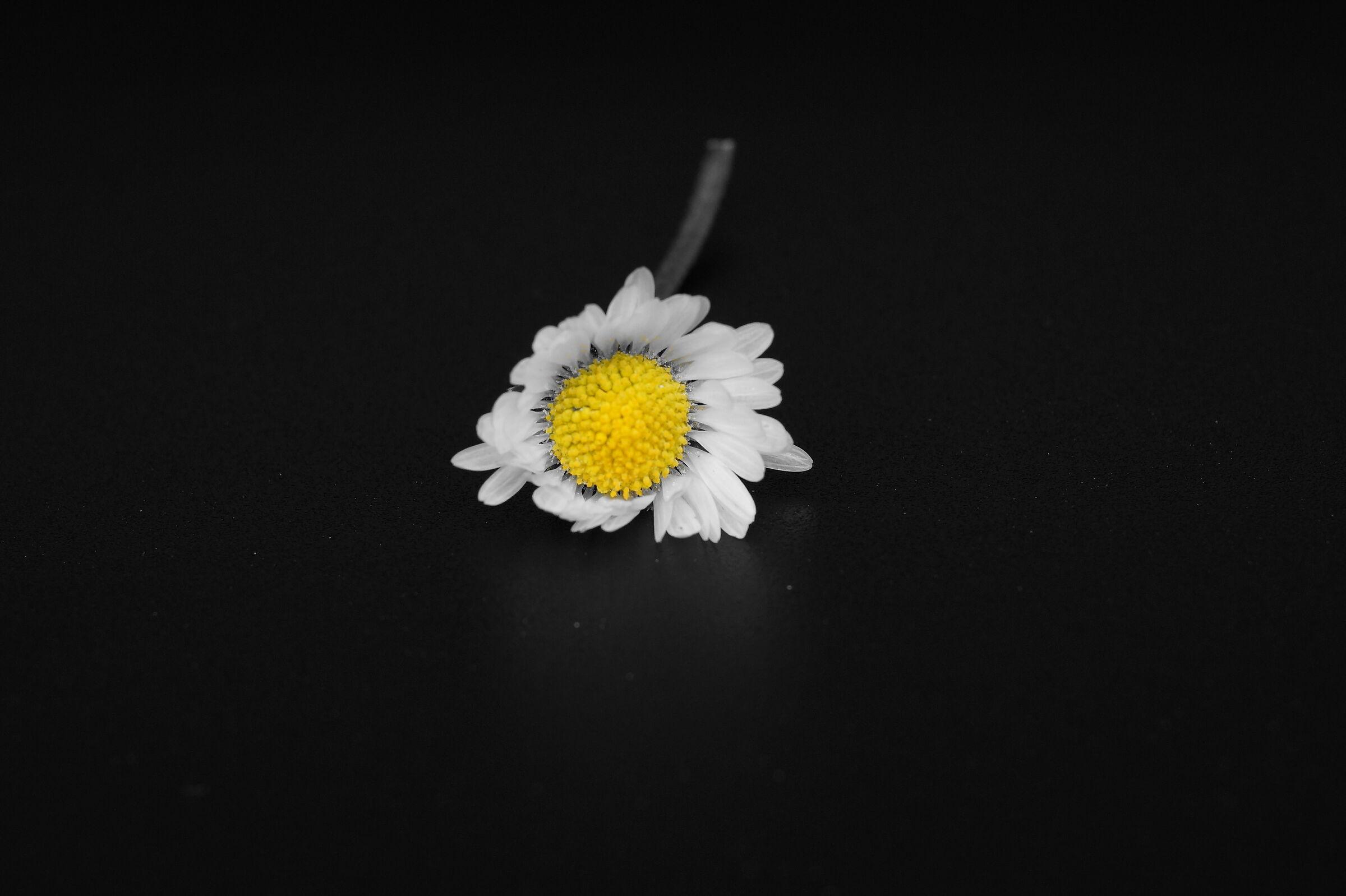 Daisy 2...