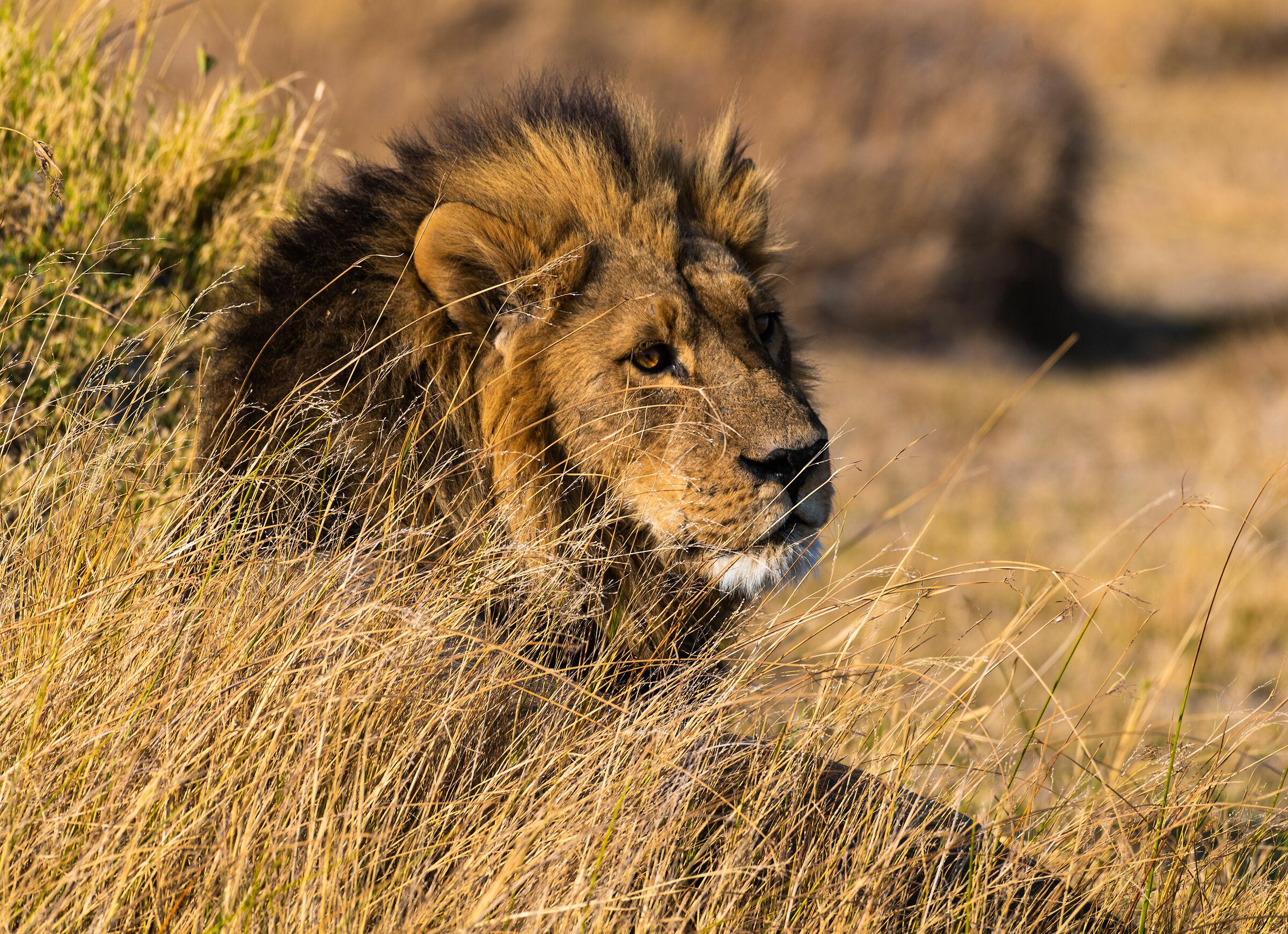 Il re dell'Okavango...