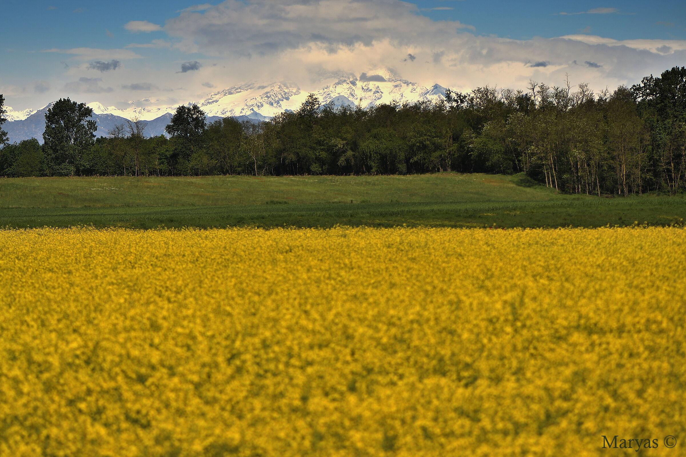 Paesaggio in giallo...