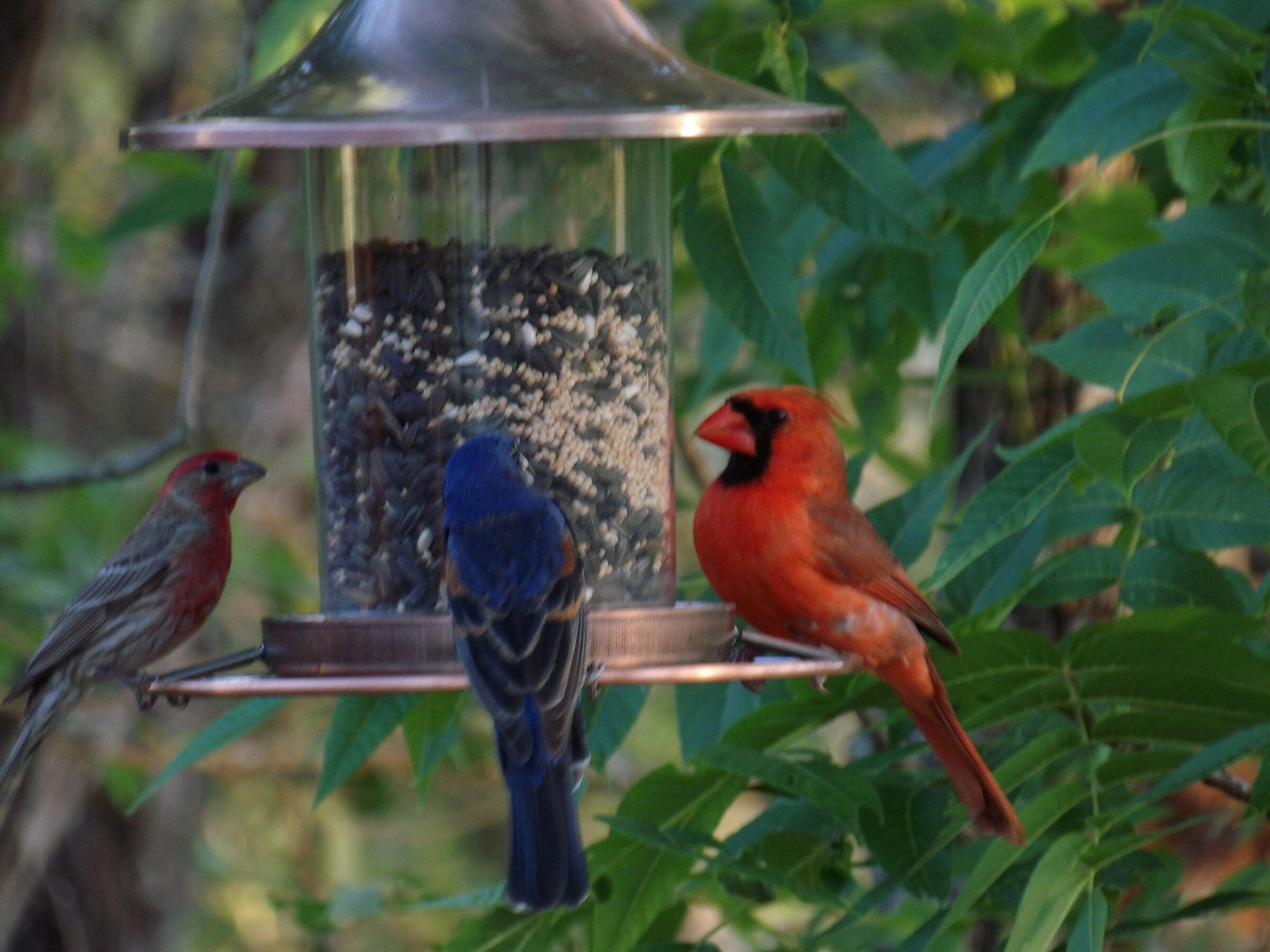 birds in the wild...