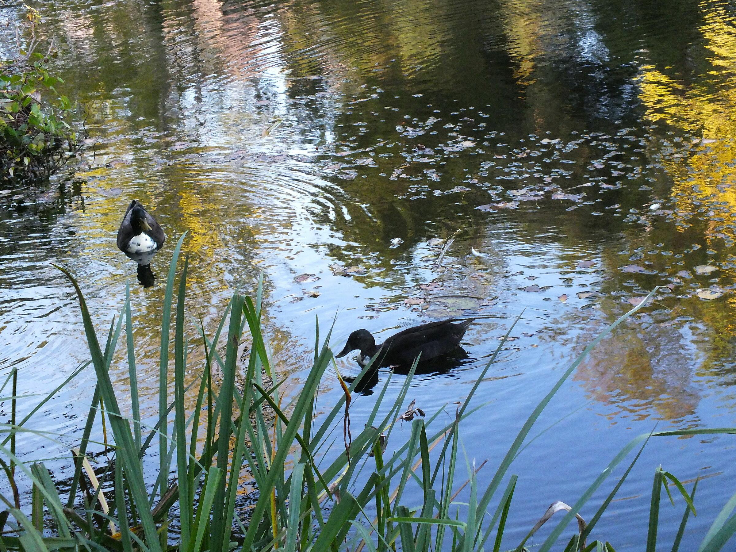 reflections, Six Fours Les Plages...