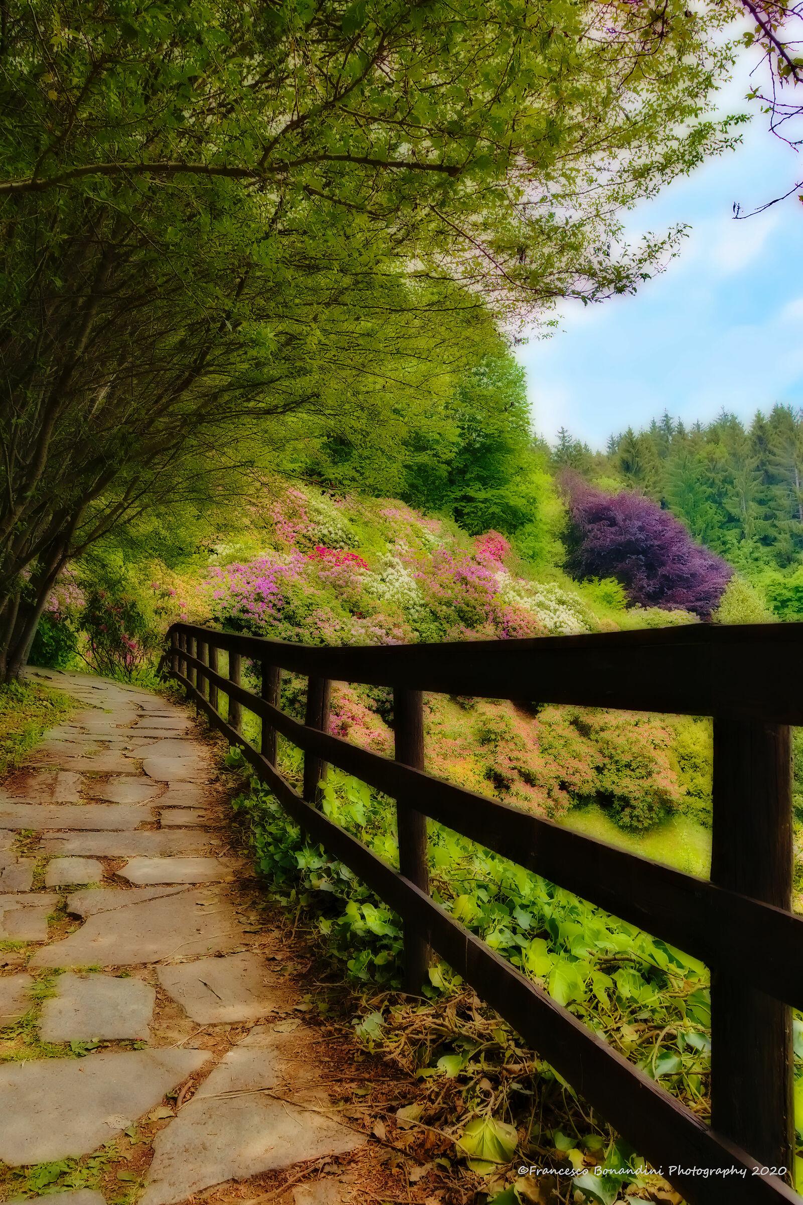 Walk among the flowers...