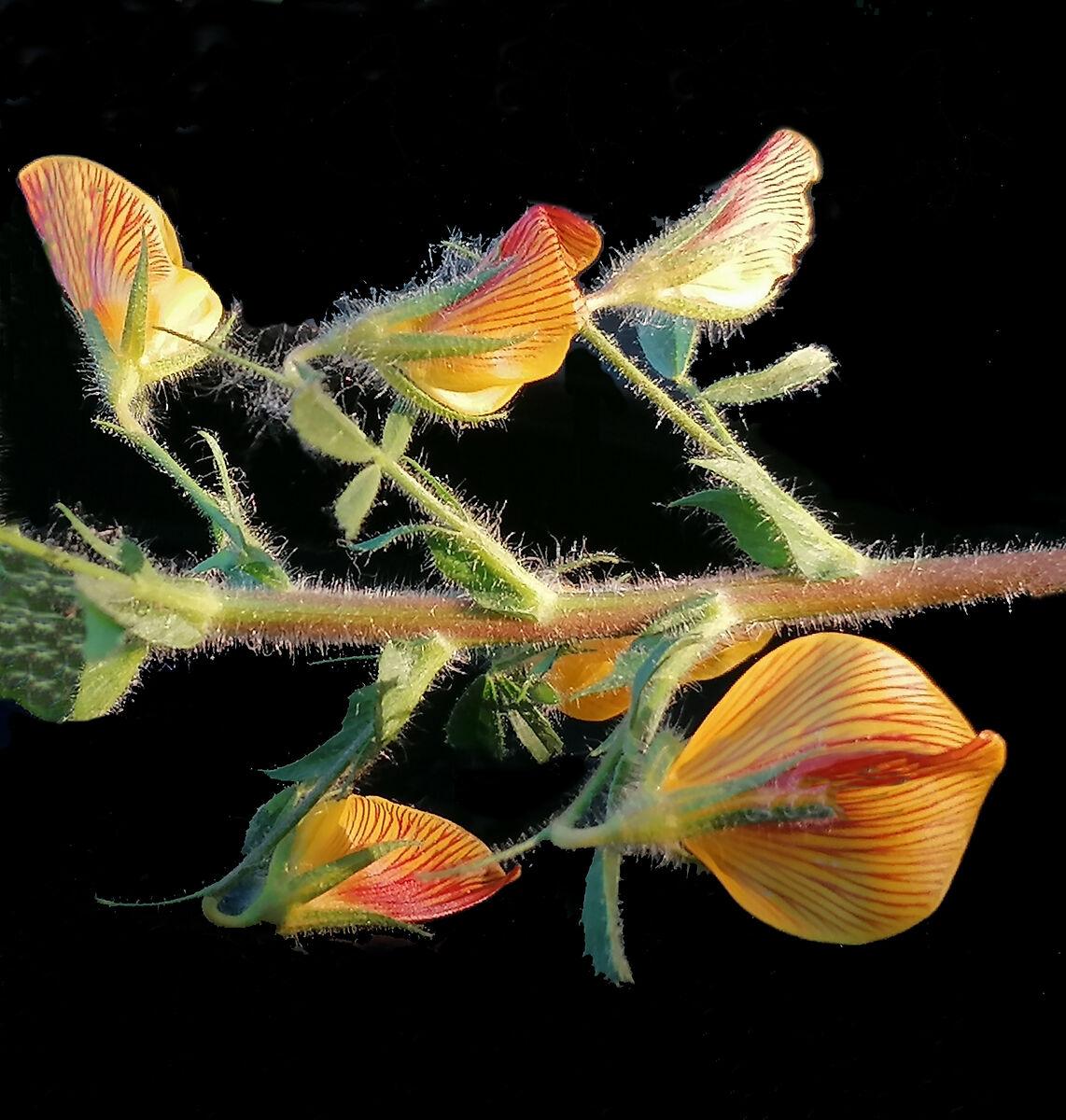 swarm of wild butterflies ...