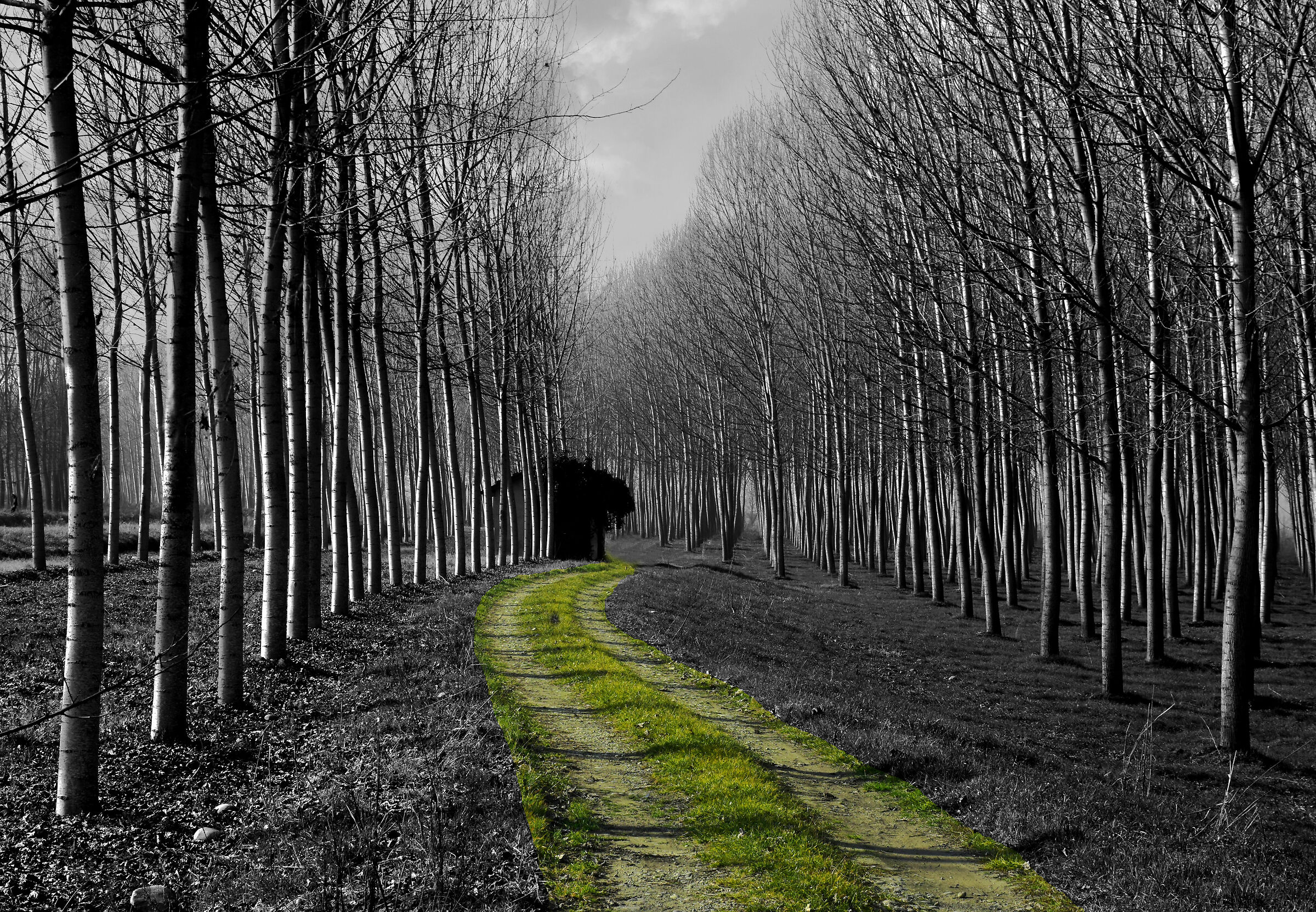 There's a road in the woods......