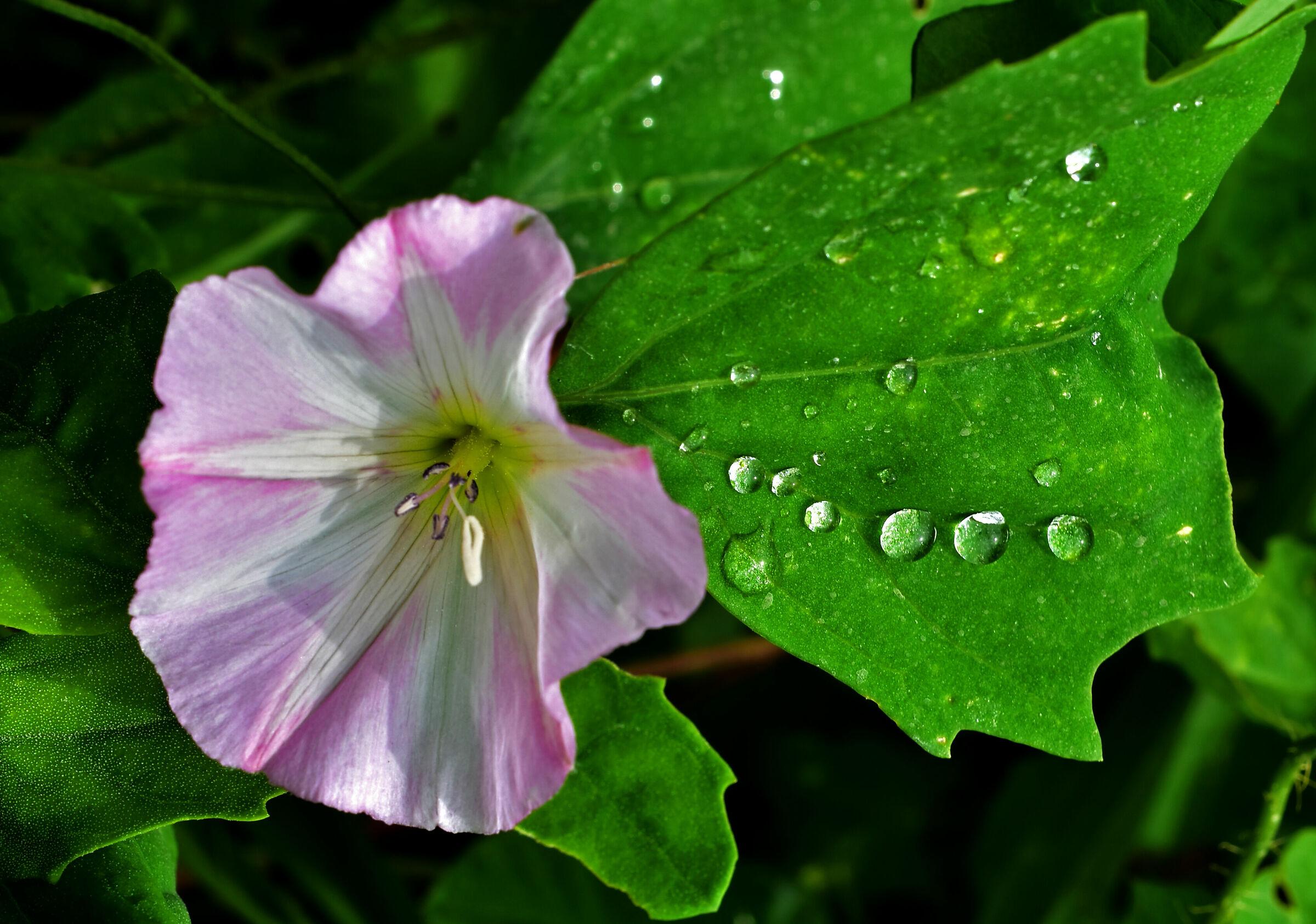 Drops over a green leaf...