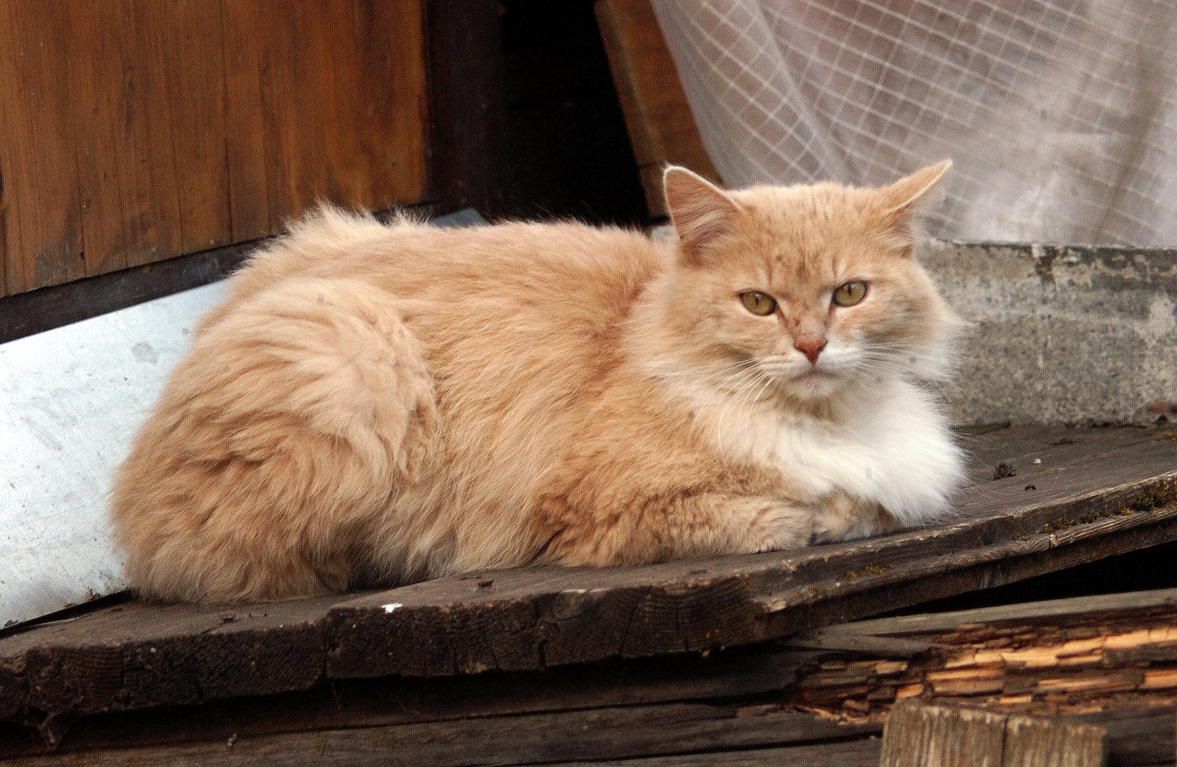 Cat portrait...