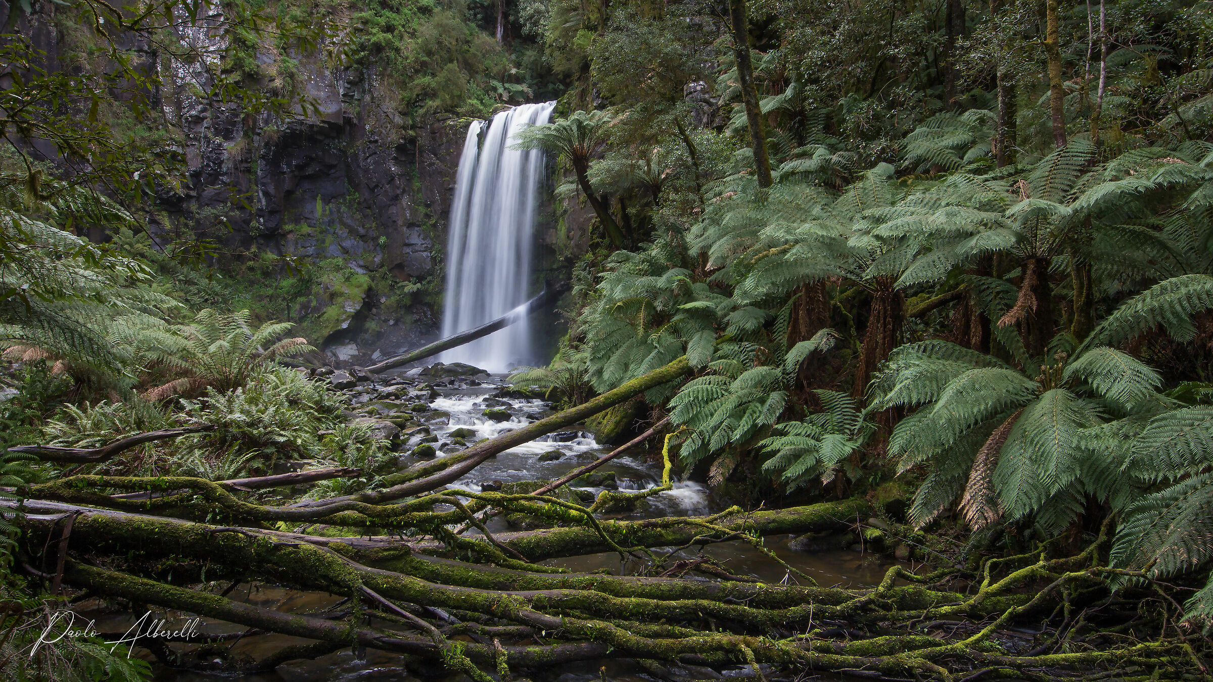 Rainforest. Great Otway National Park....