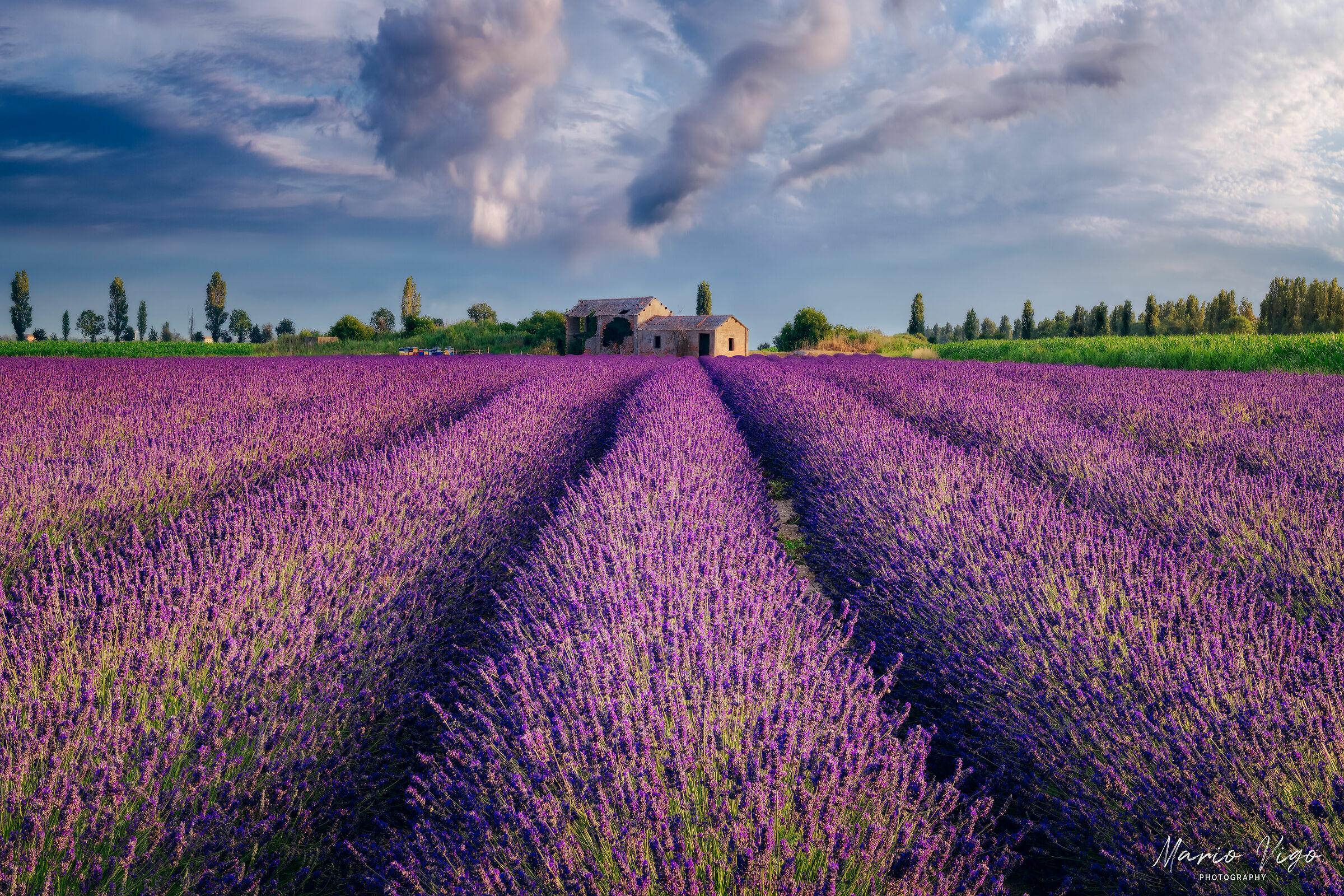 Italian Provence...