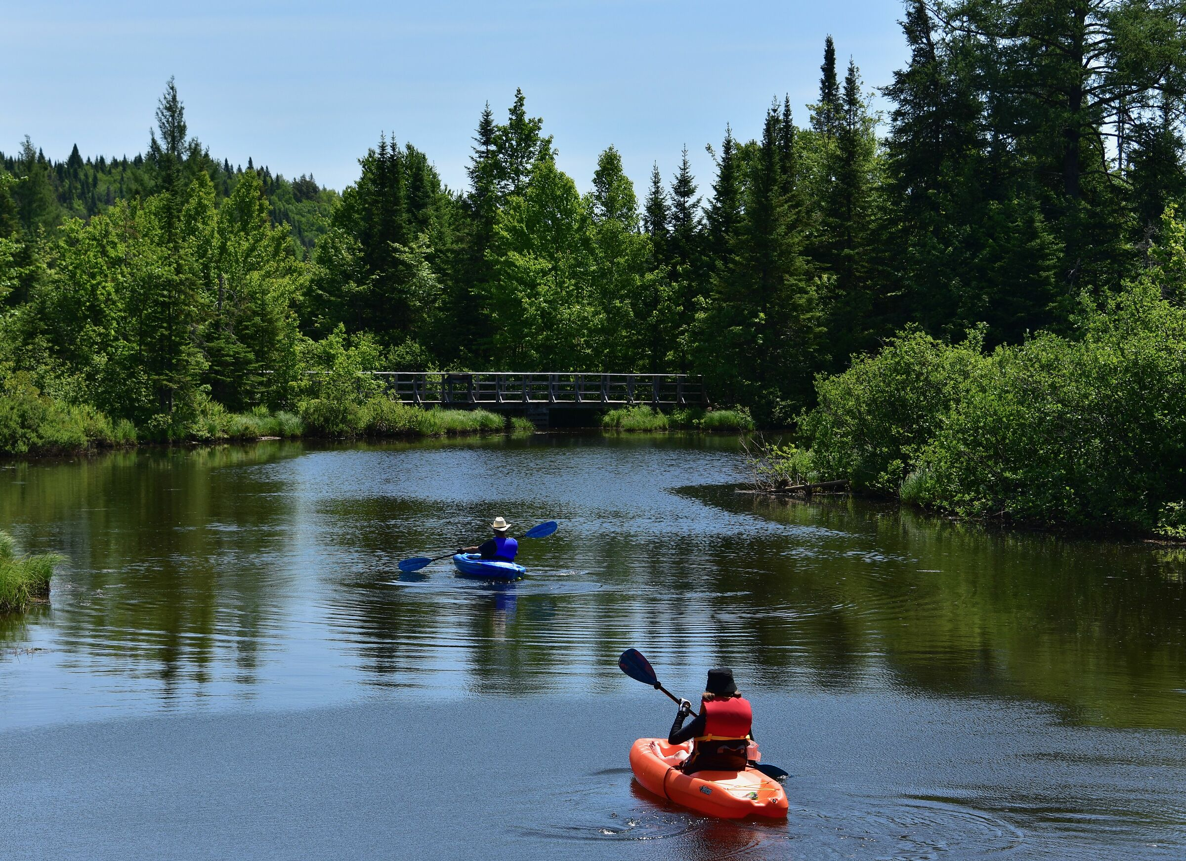 Sport '' Kayak '' relaxed in swamps...