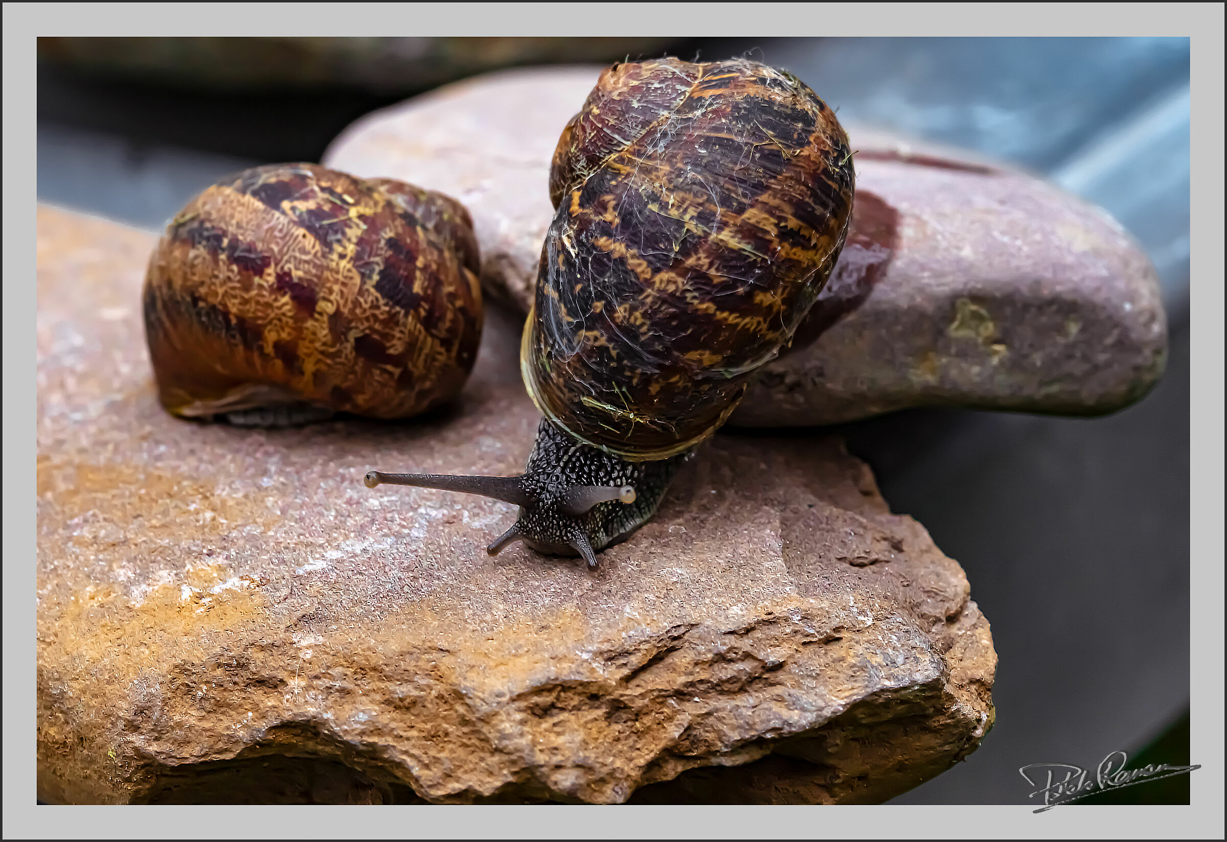snail...