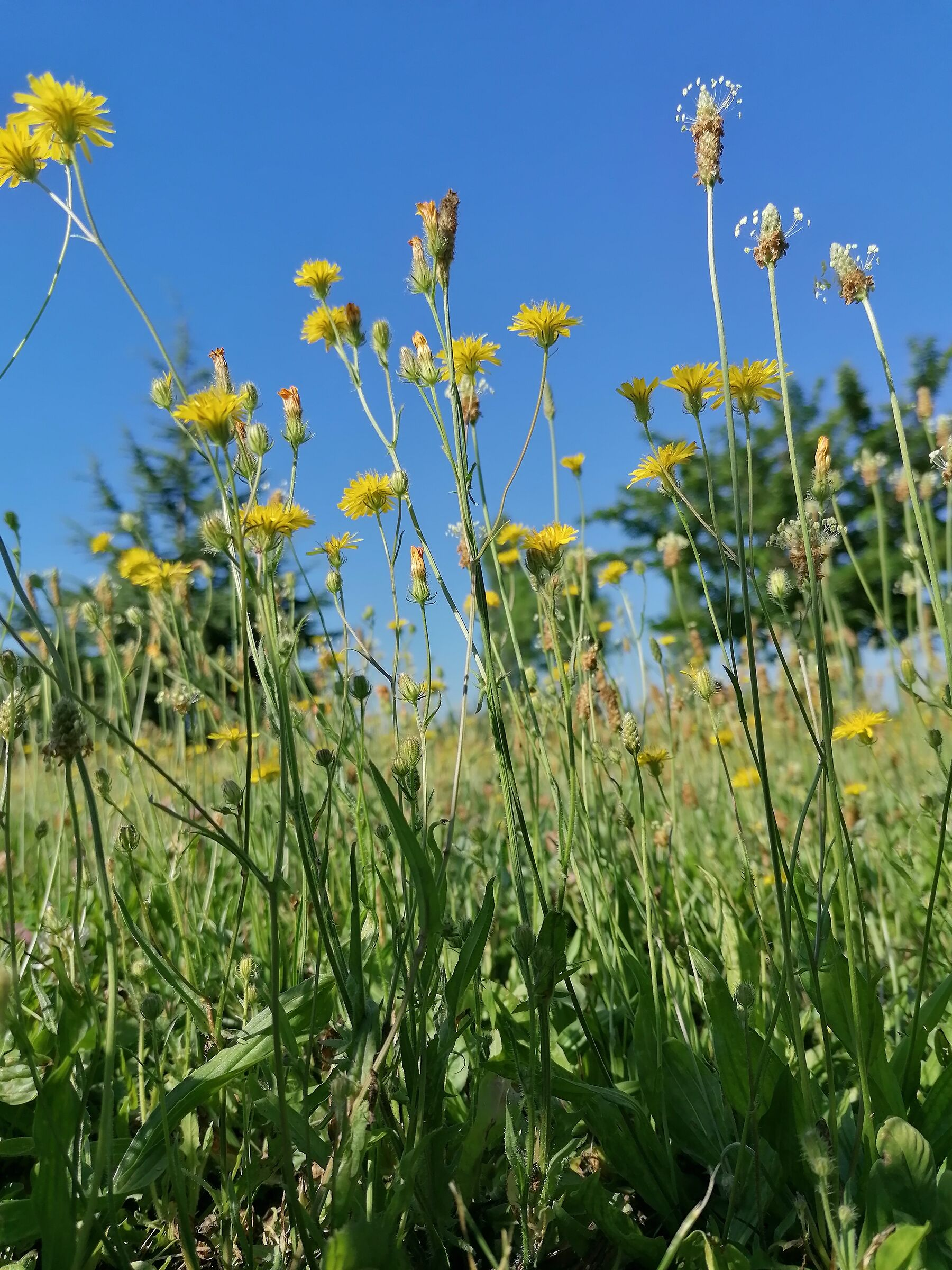 Blue sky and yellow flowers...