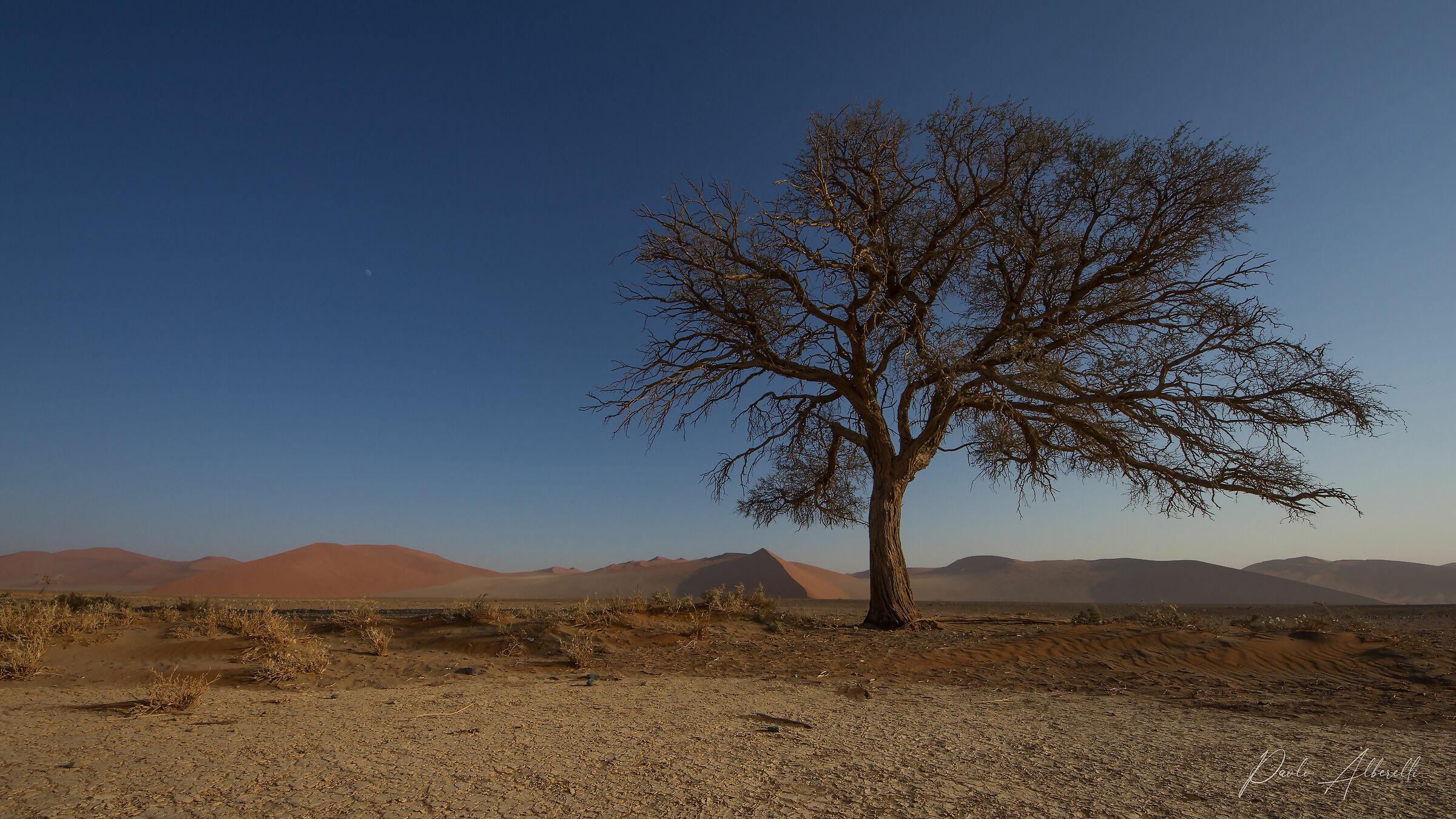 Deserto del Namib...