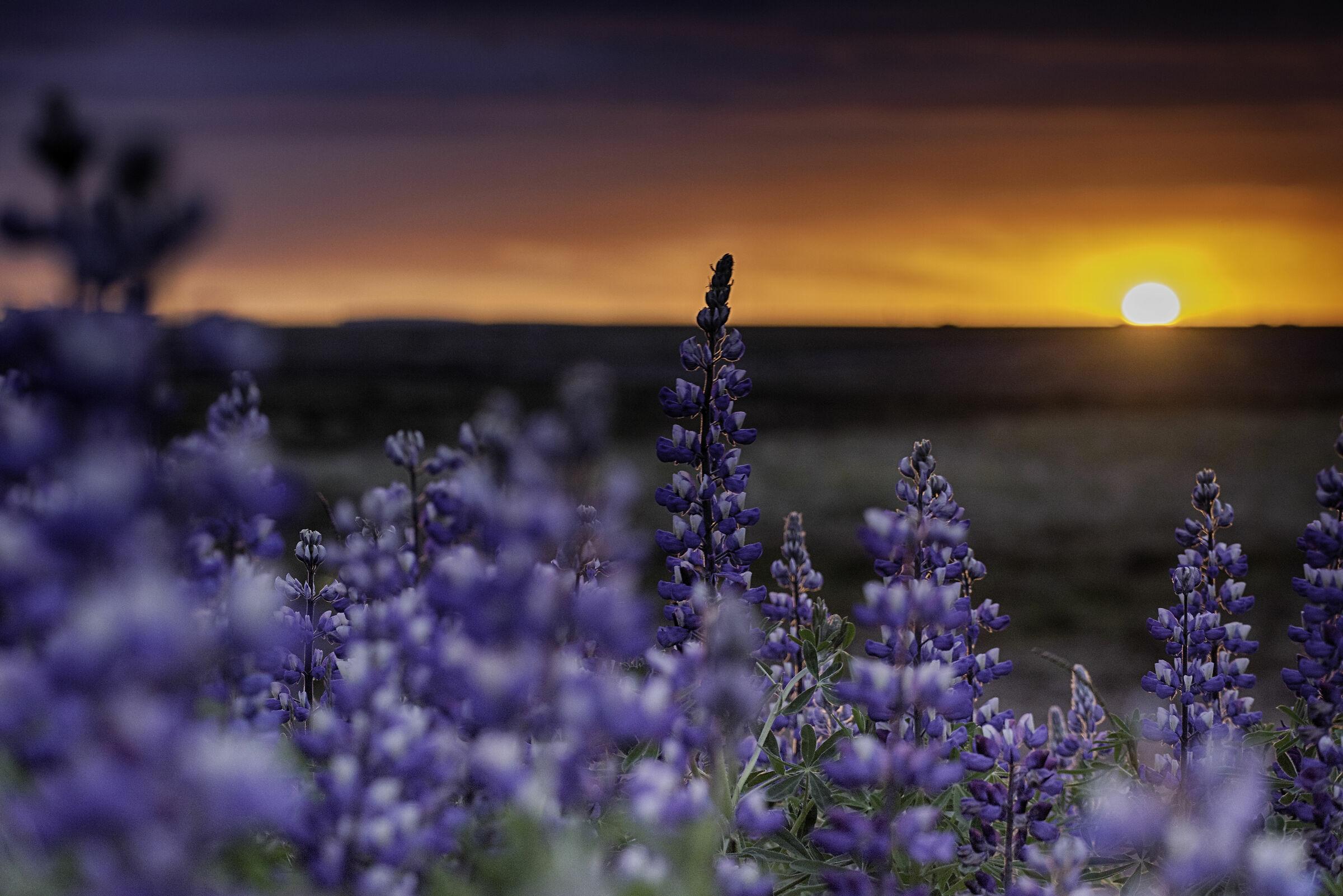 Infinite sunset...