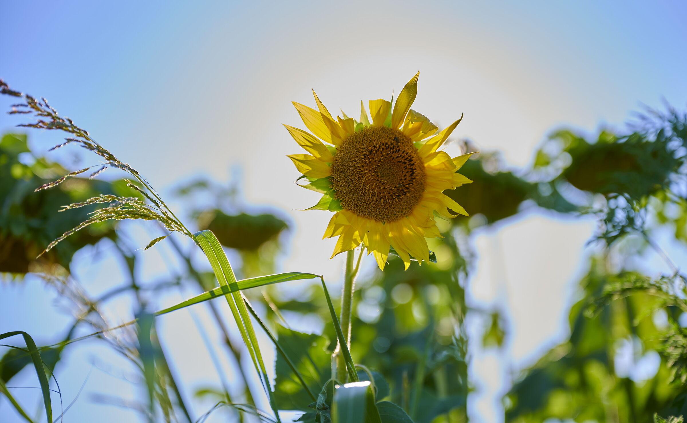 In the Sun...