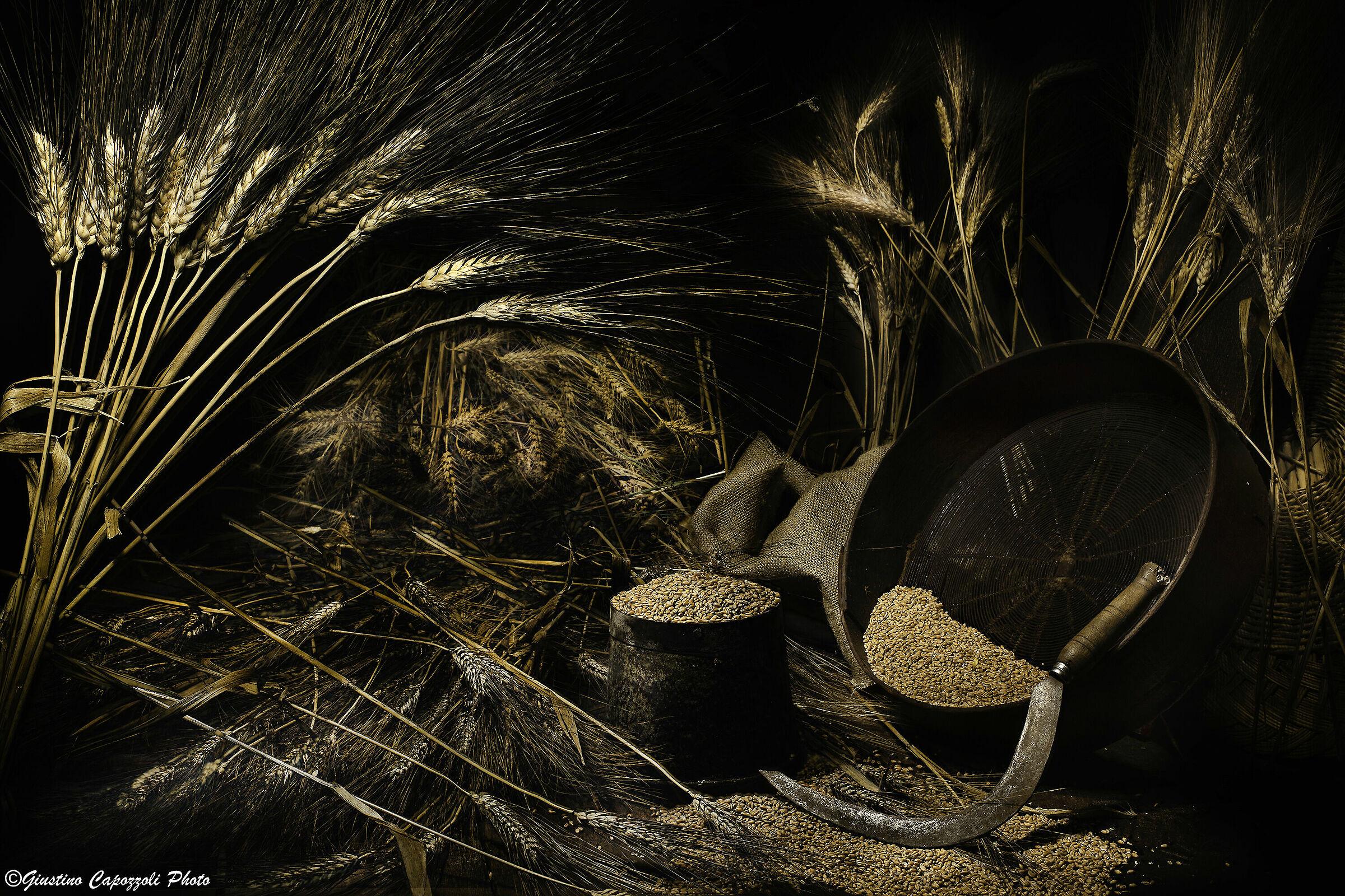Grain Senator Hats...