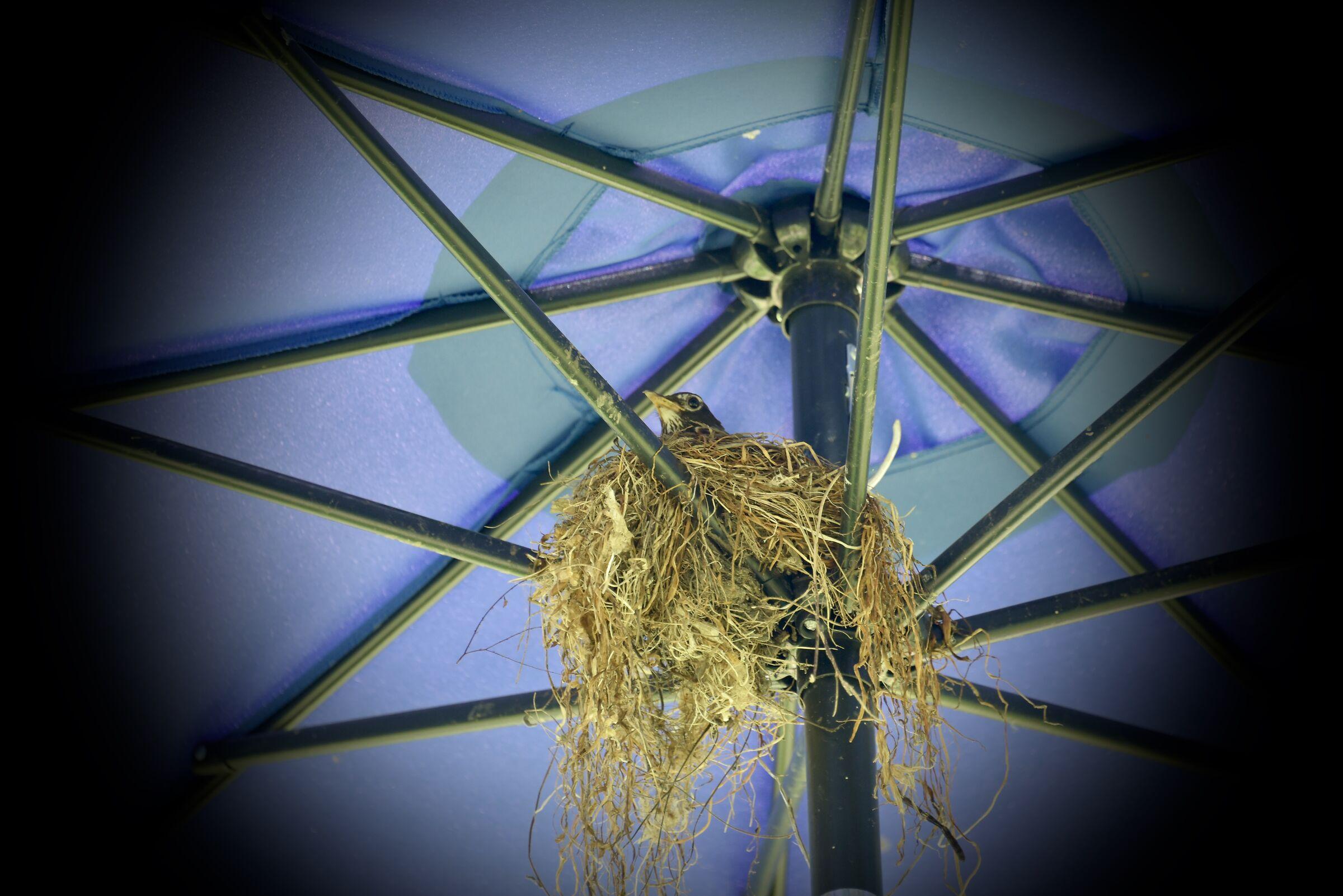 Birdcatch, Domaine Joly - Quebec...