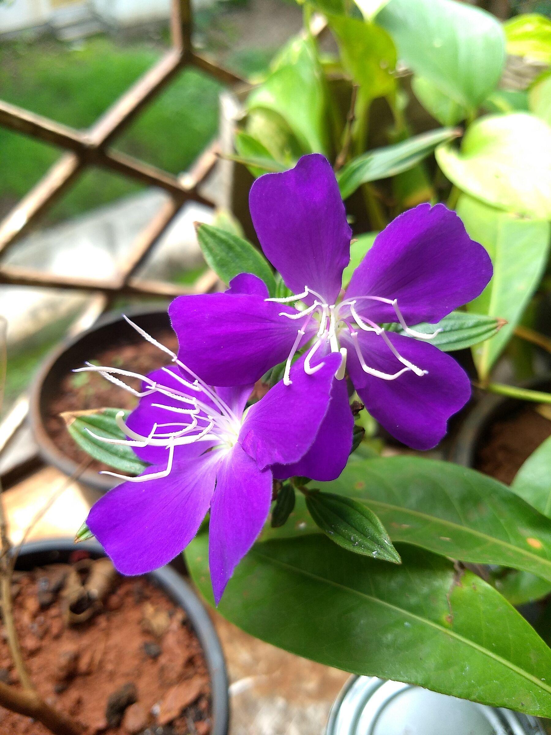 Purple Glory...