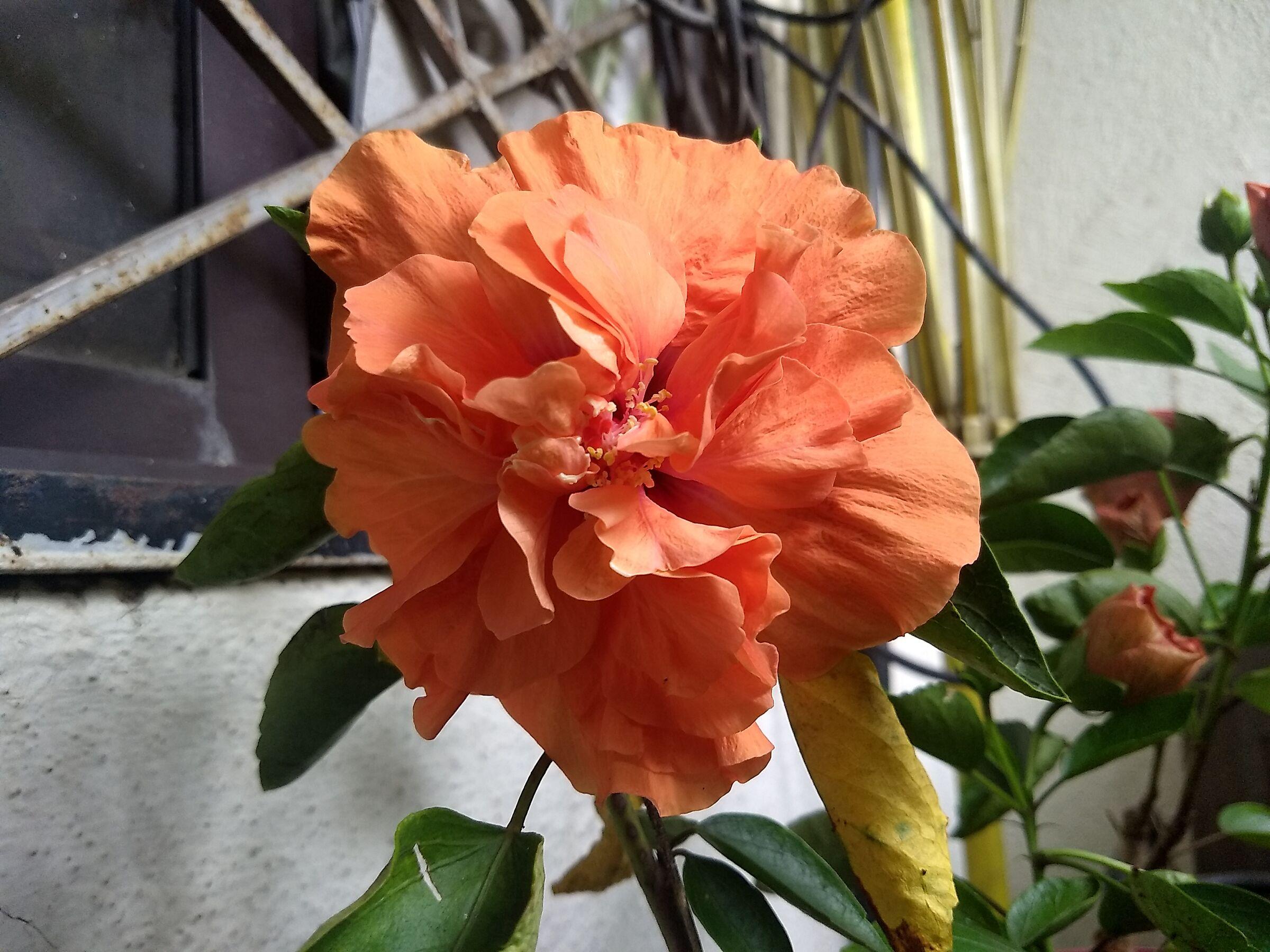 Flowers 5...