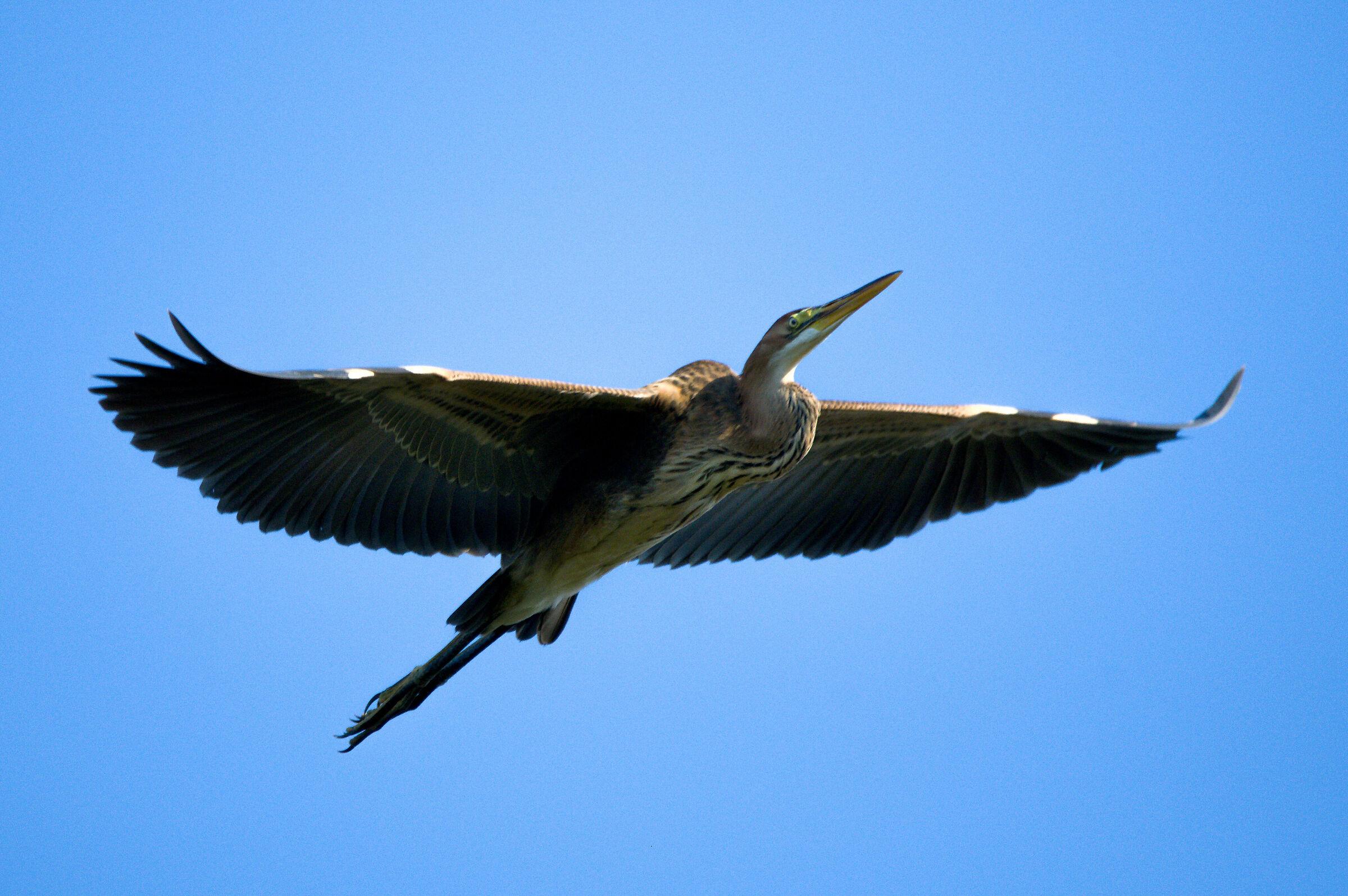 Heron Red...