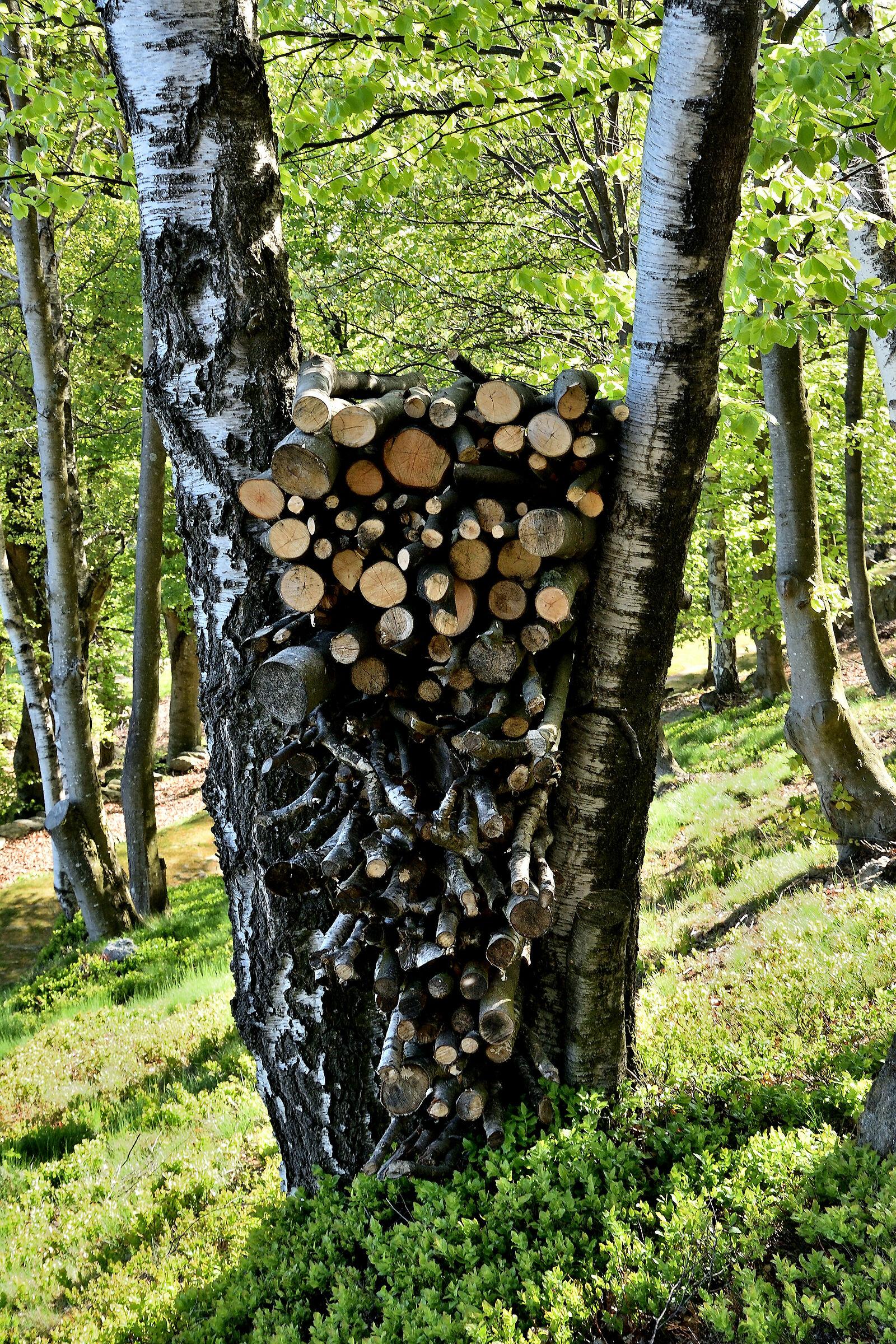 Ordered wood pile...