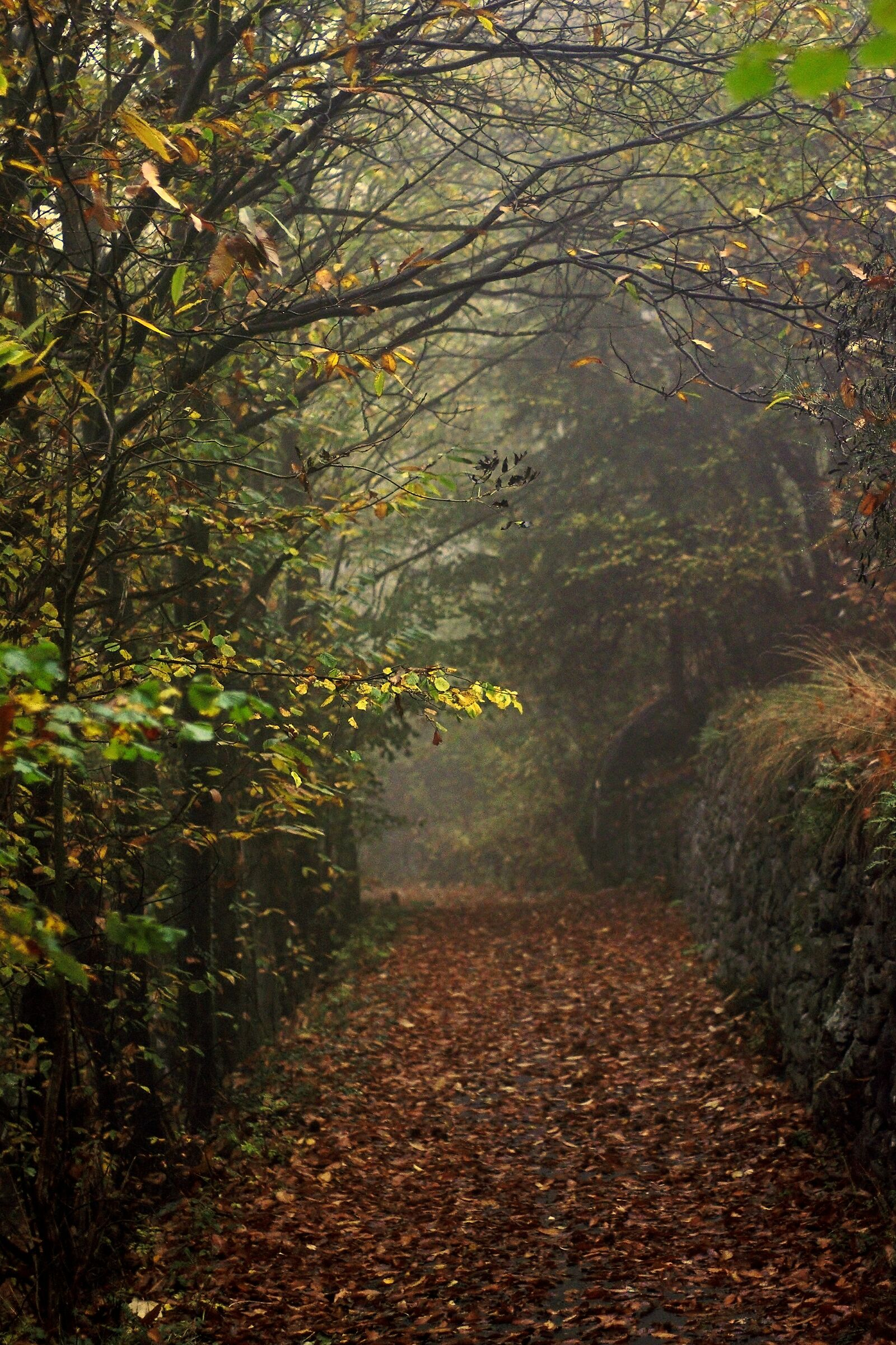 Autumn Trail - Serra Cross, Andrate...