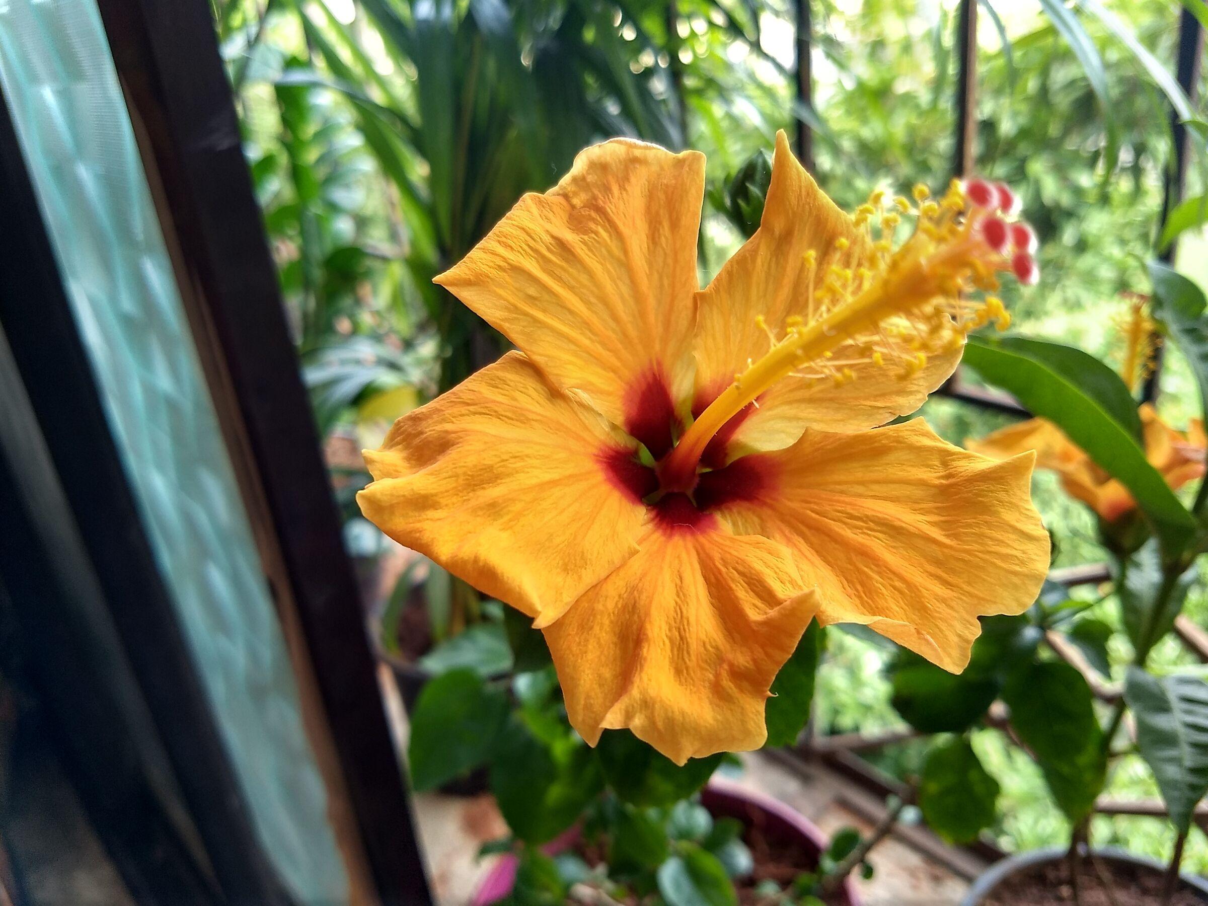 Flowers 12...