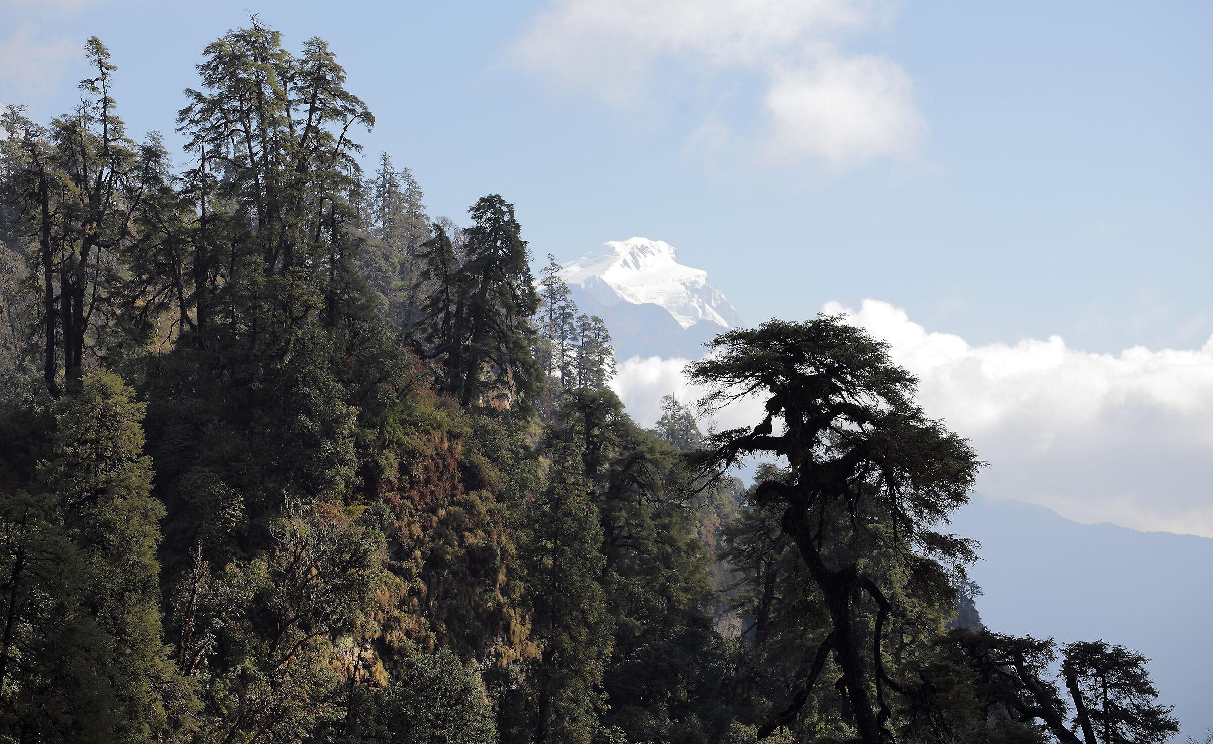 Rodeando el Annapurna...